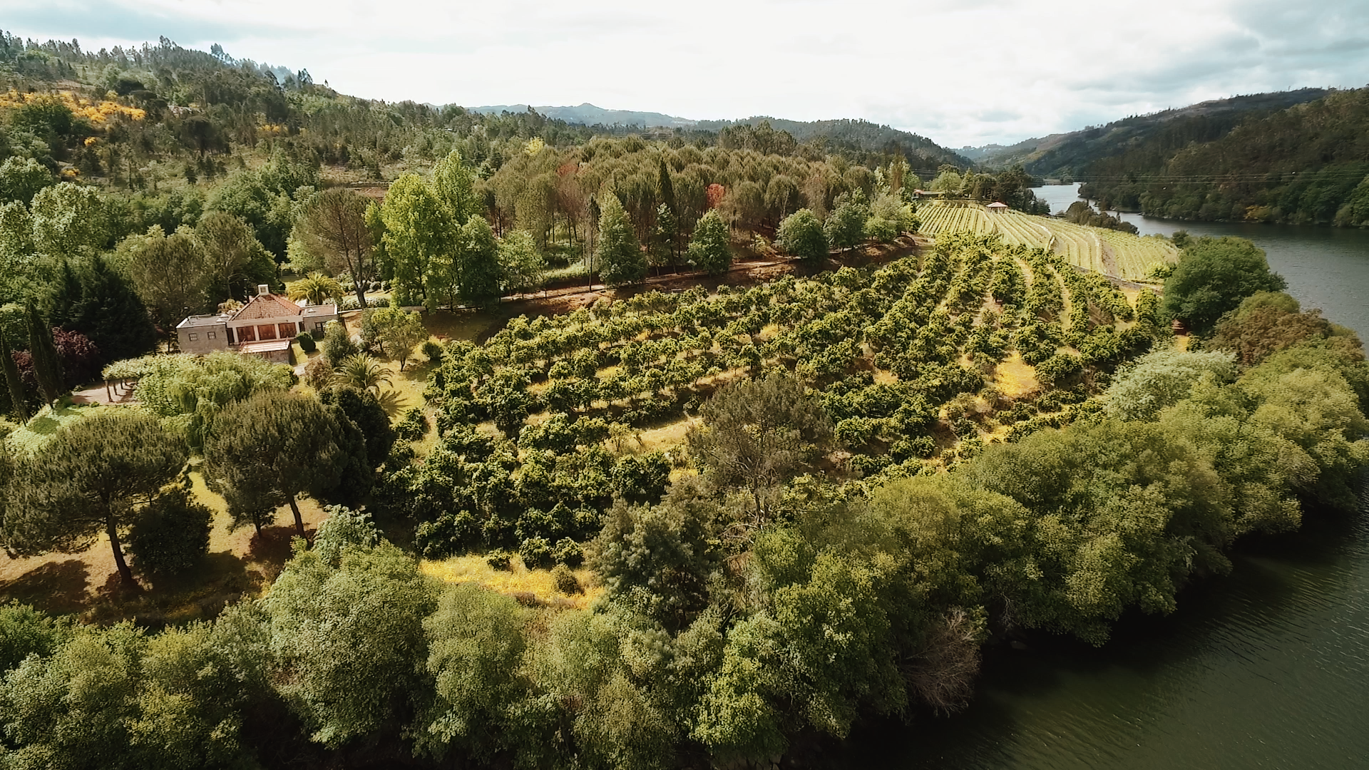 drone footage over Portuguese wine country