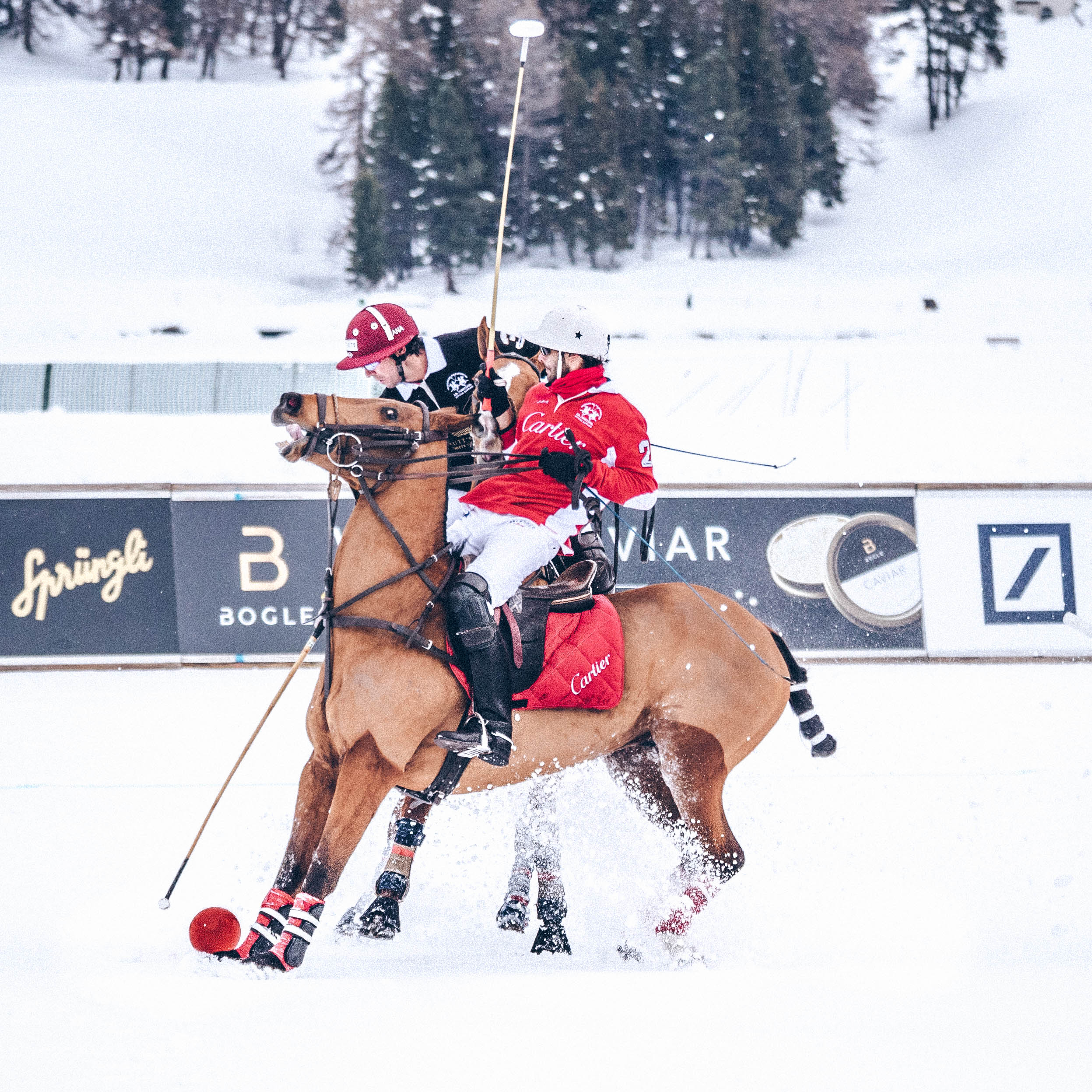 snow polo teams Cartier and badrutts at the st. Moritz World Cup
