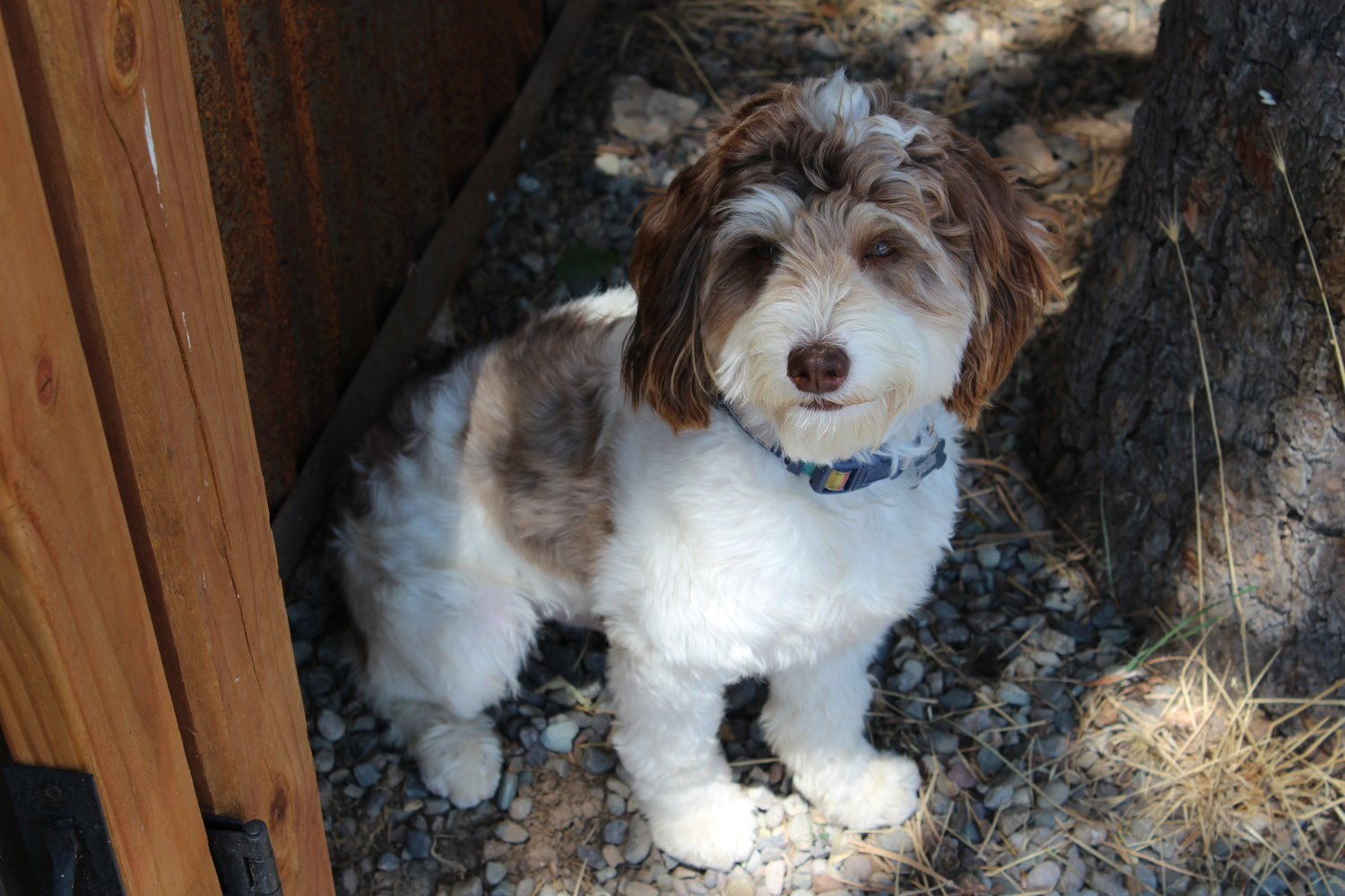 About Us — Ranch House Bernedoodles