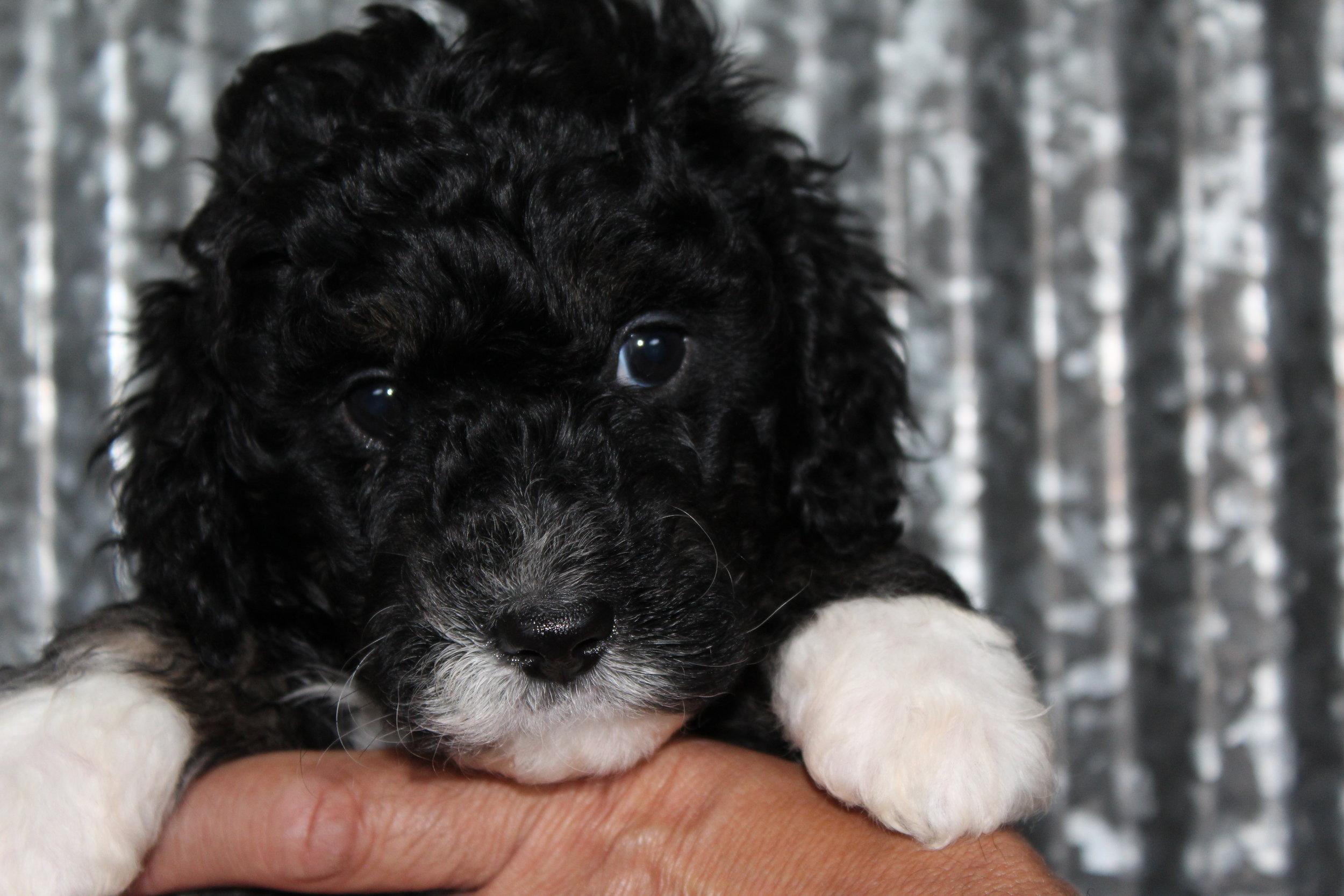 Peep!    5 1/2 weeks