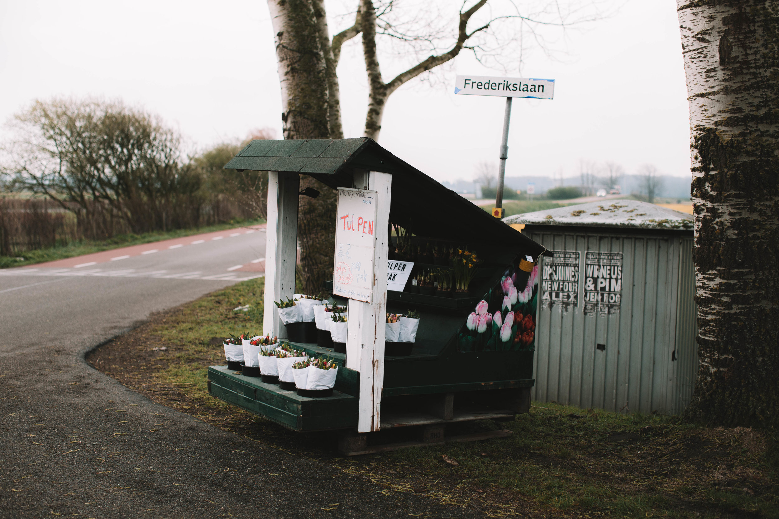 tulip-roadside-stand-hillegom