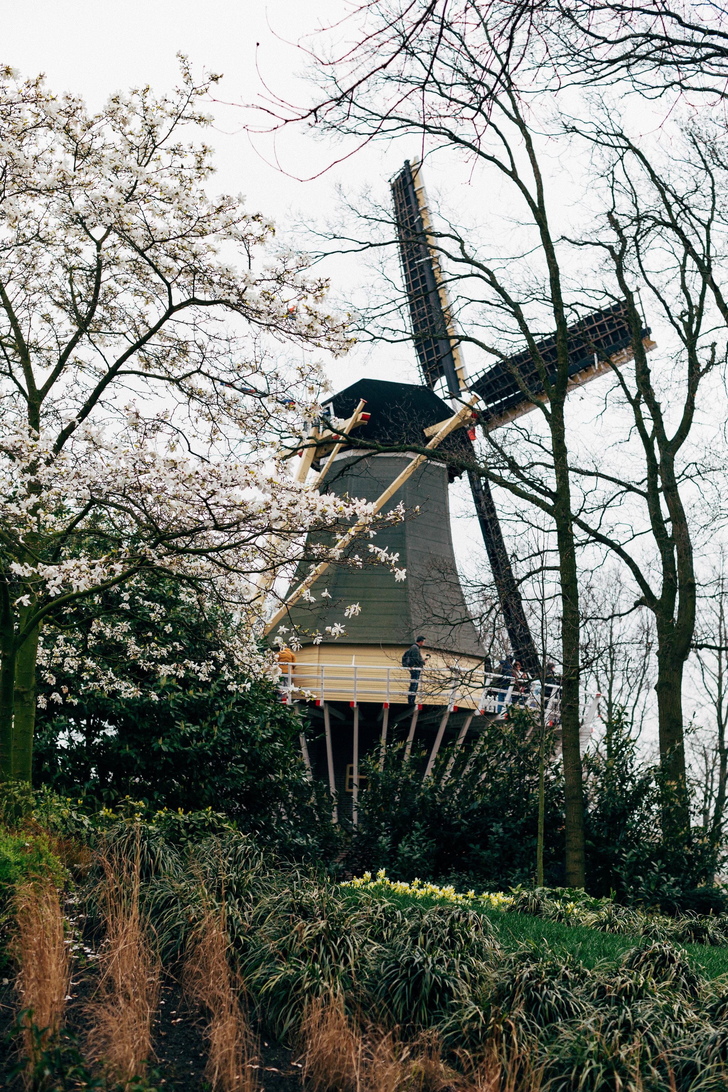 windmill-keukenhof