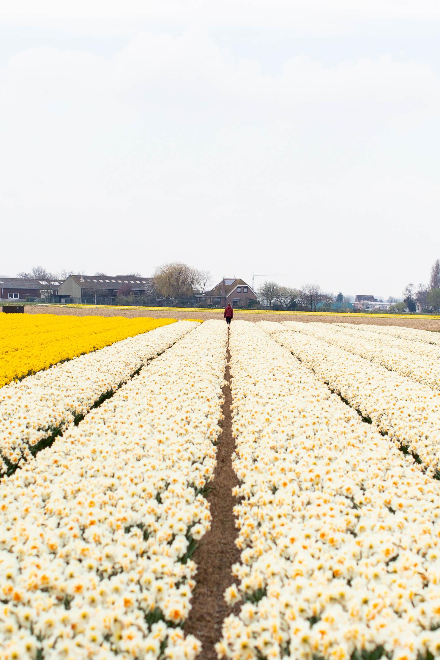 dutch-flower-farmer.jpg