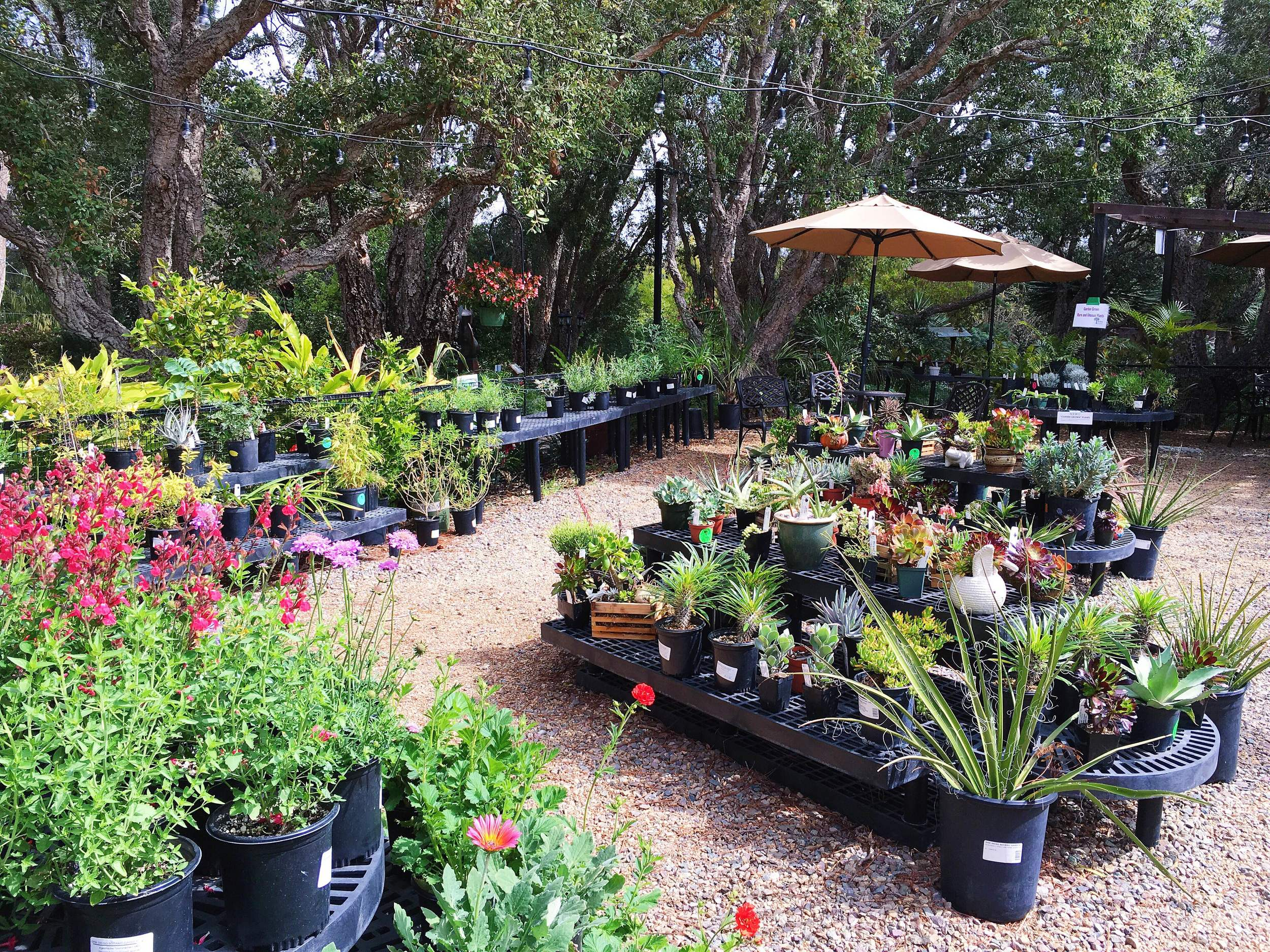 SD Botanic Garden Flowers for Sale