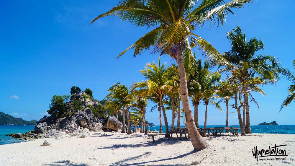Islas de Gigantes. Palm trees.