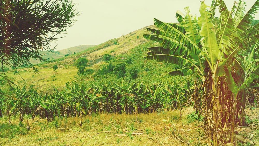 illumelation kibale view top of the world feet crater lake plantation banana.jpg