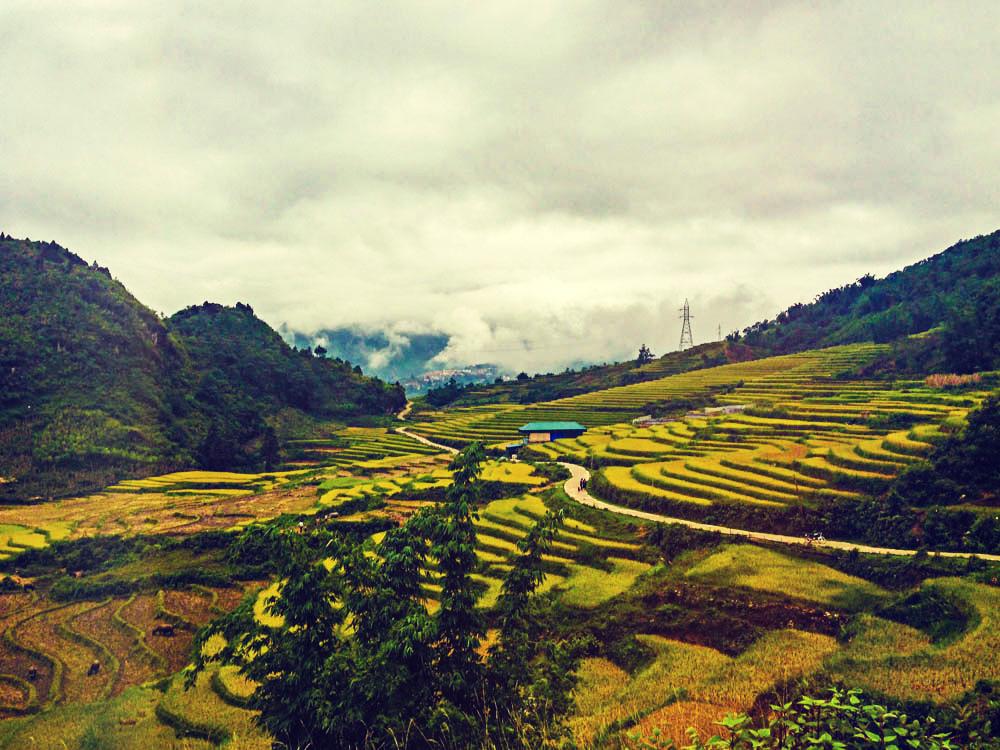 Sapa Vietnam.jpg的稻田