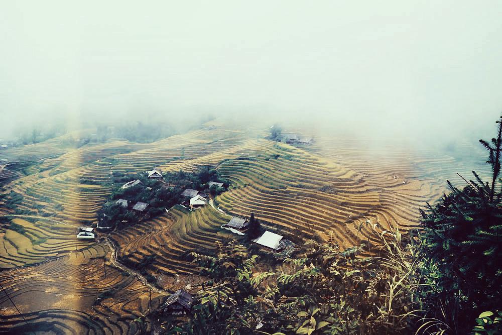 越南萨帕的梯田景观