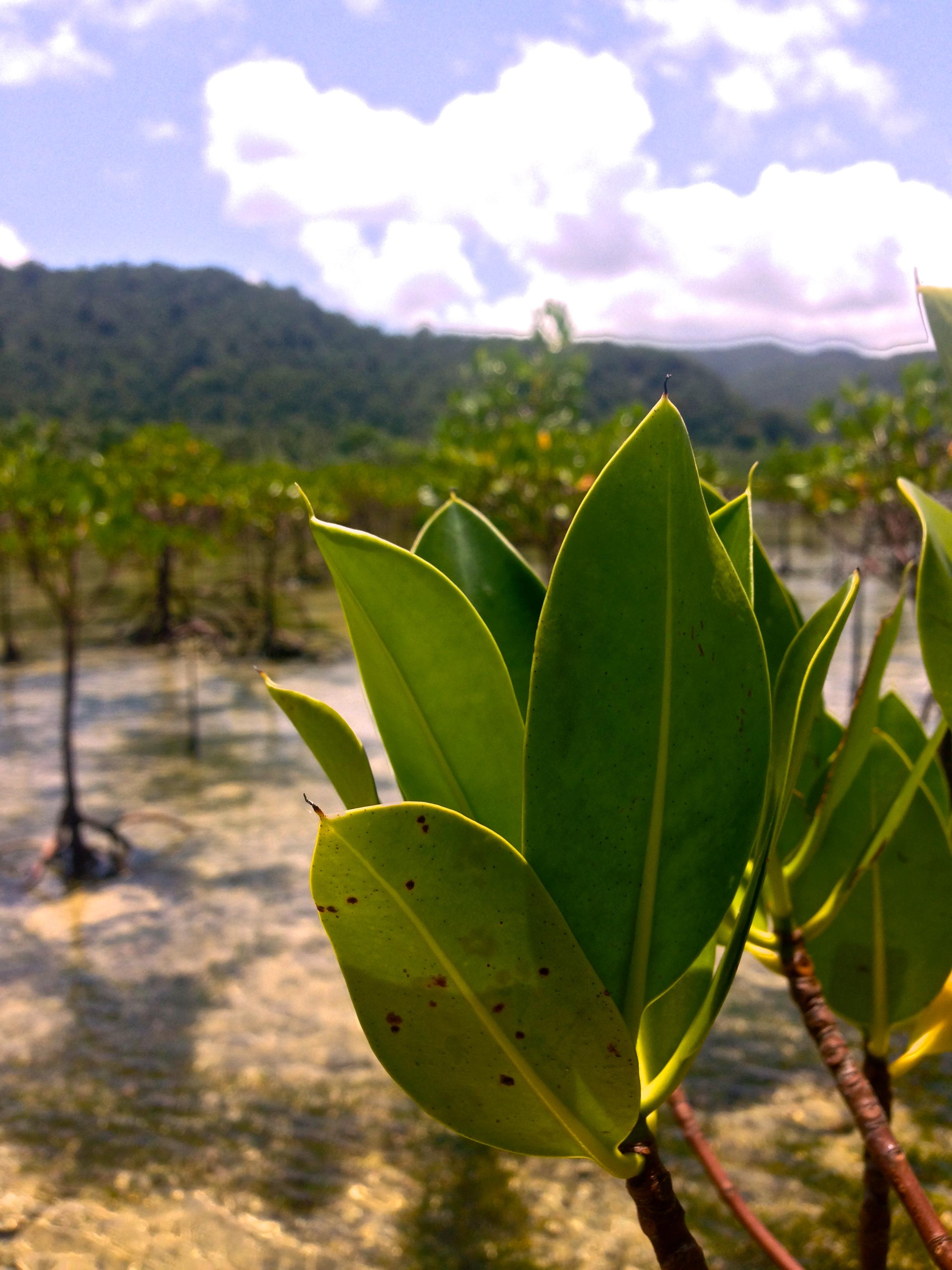 Cemento mangrove reserve