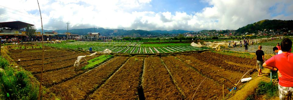 Strawberry picking fields in Baguio, Benguet Province - Luzon, Philippines