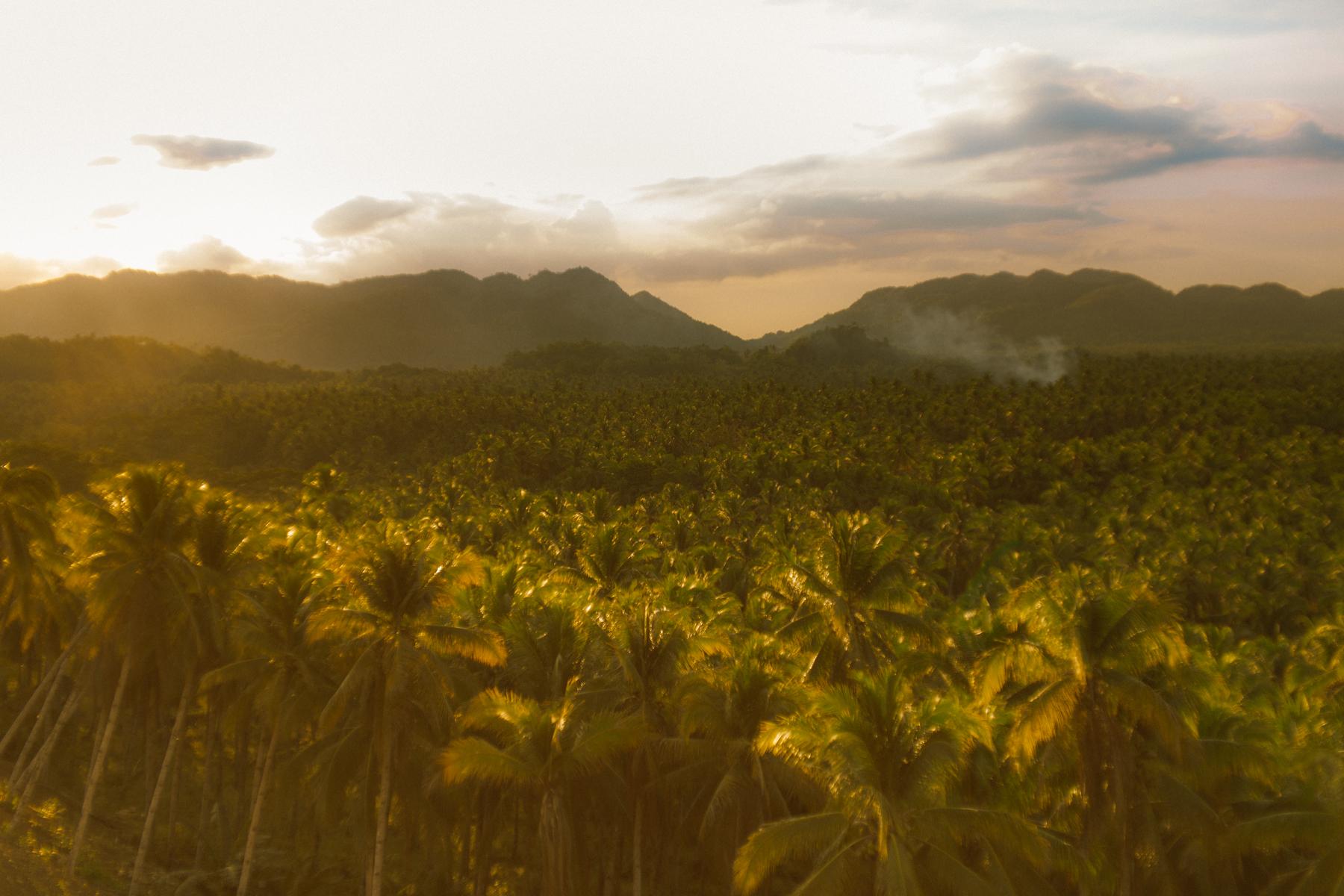 Siargao,菲律宾-椰树冠层-日落的感觉