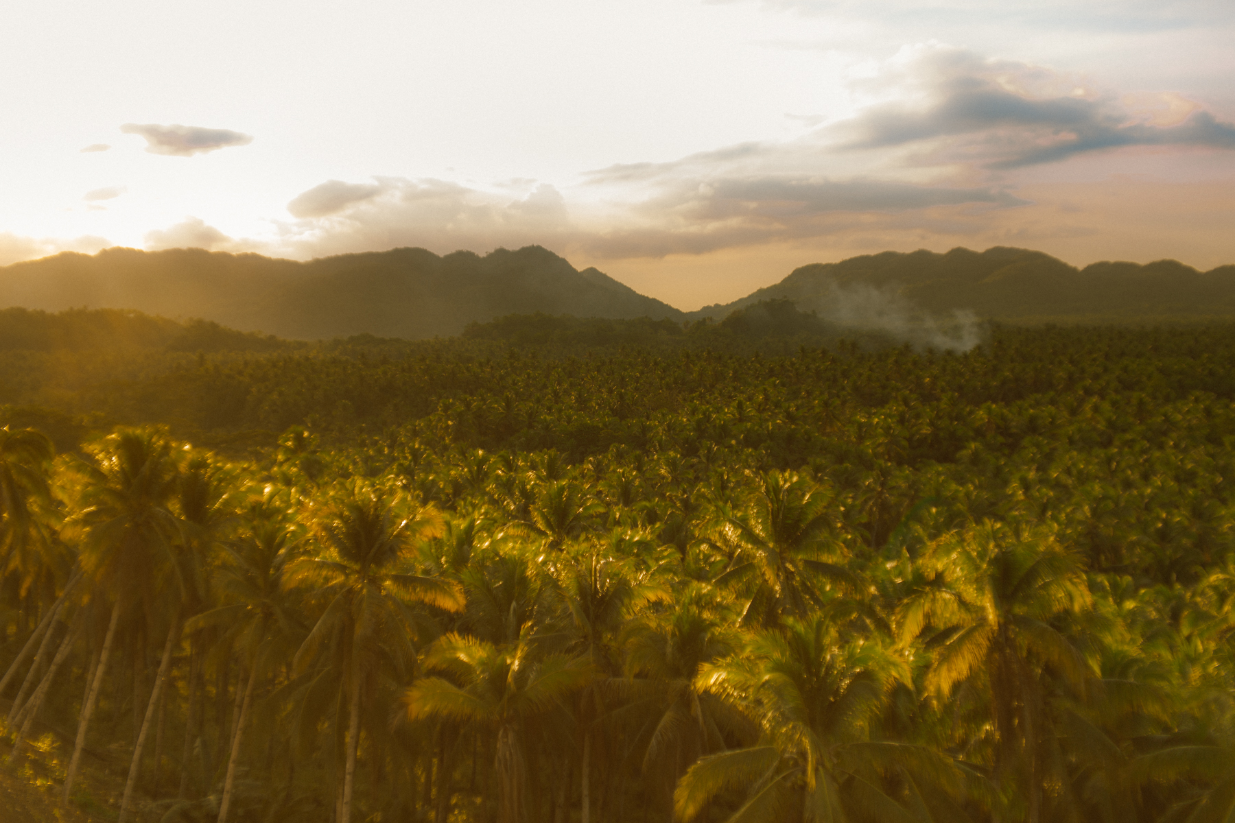 Siargao, Philippines - Coconut Tree Canopy - Sunset Feels