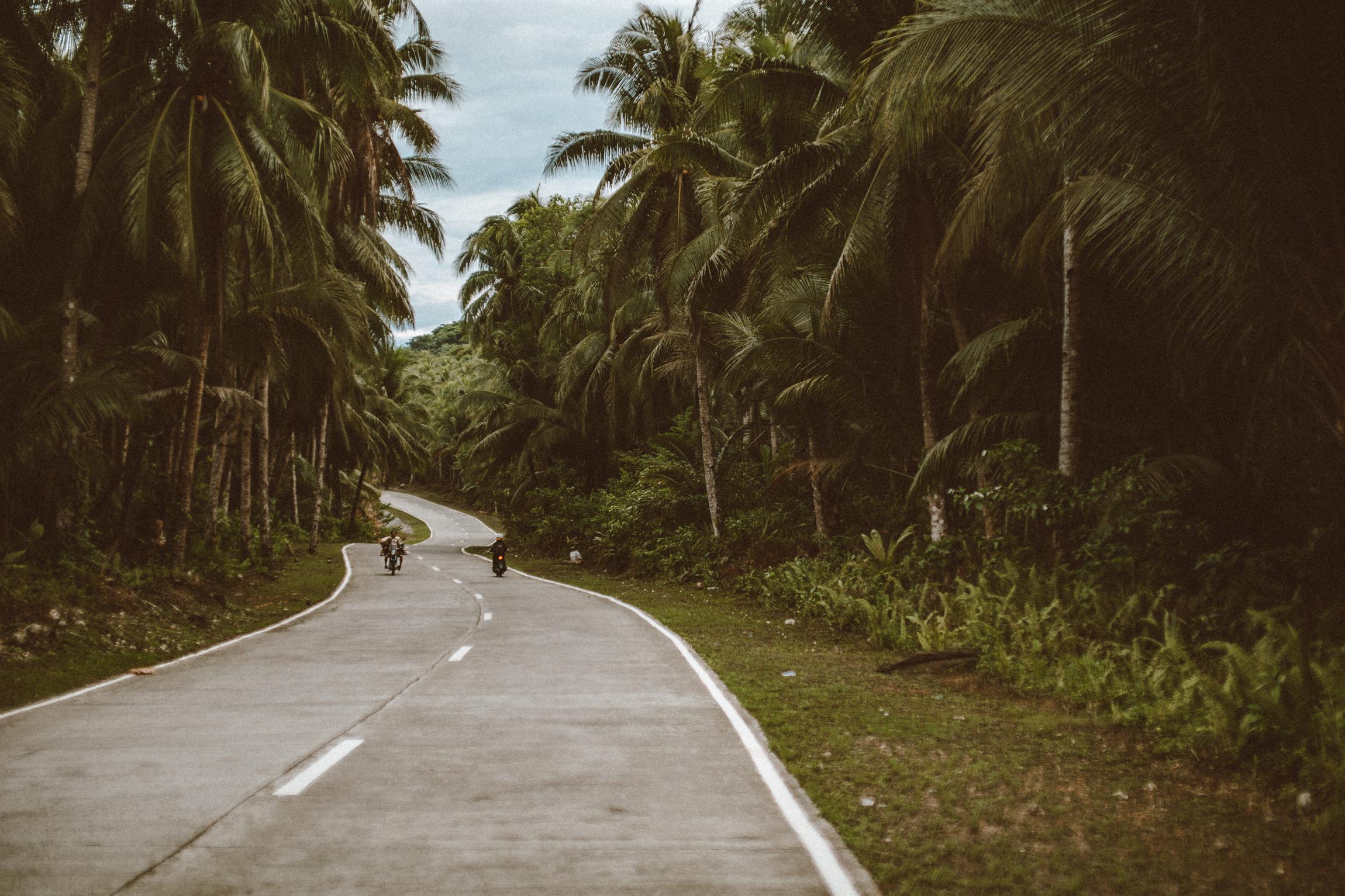 Siargao蜿蜒的道路-椰子树