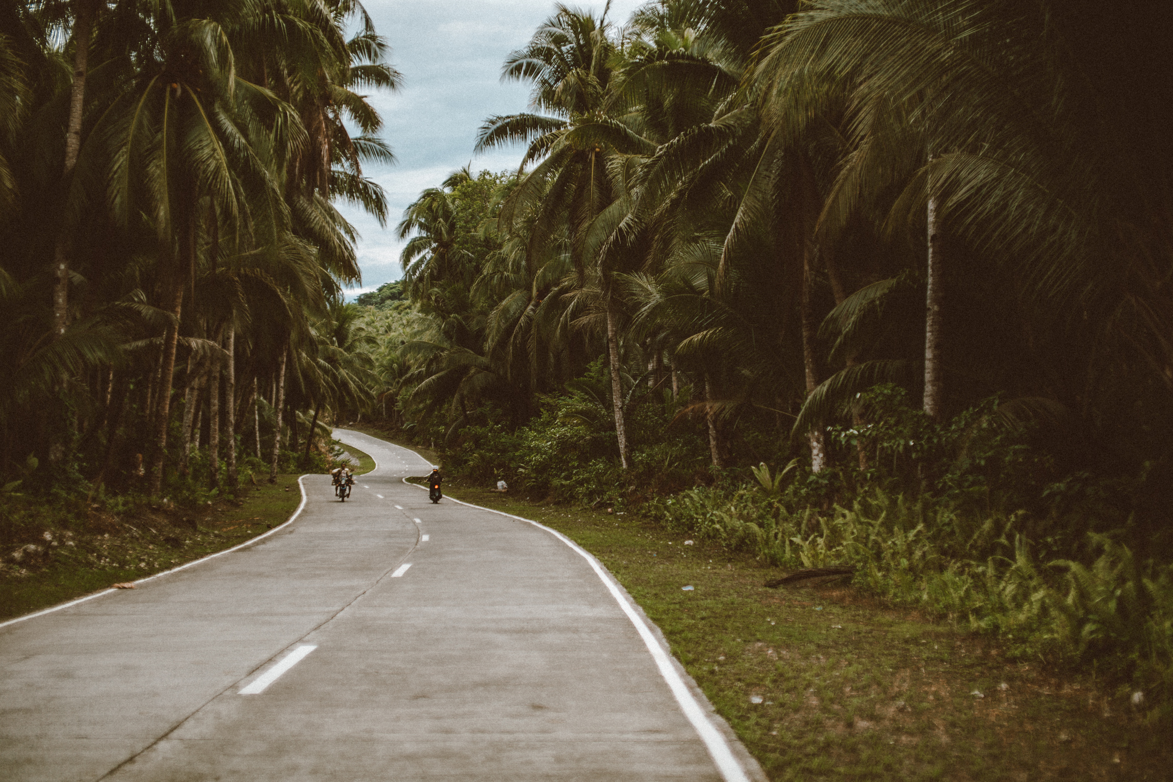 Siargao Winding Roads - Coconut Trees
