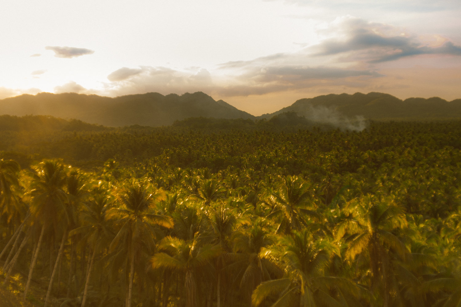 Siargao,+Philippines+-+Coconut+Tree+Canopy+-+Sunset+Feels.jpg