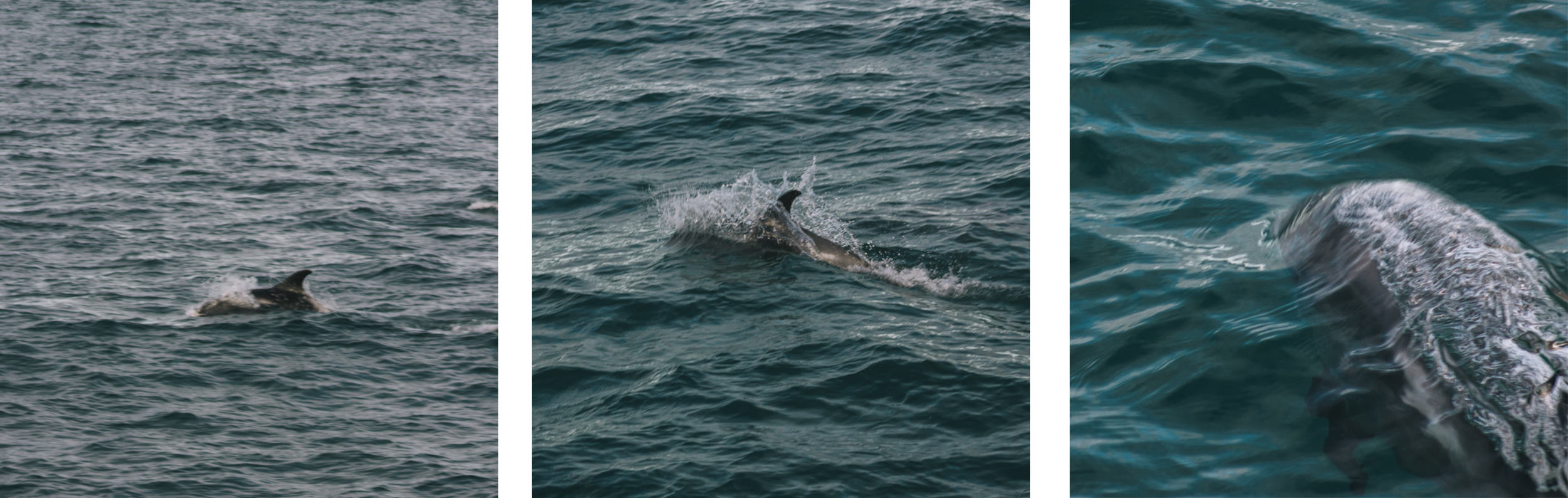 格陵兰海中发现的野生海豚-Kat Wainstok拍摄的图片