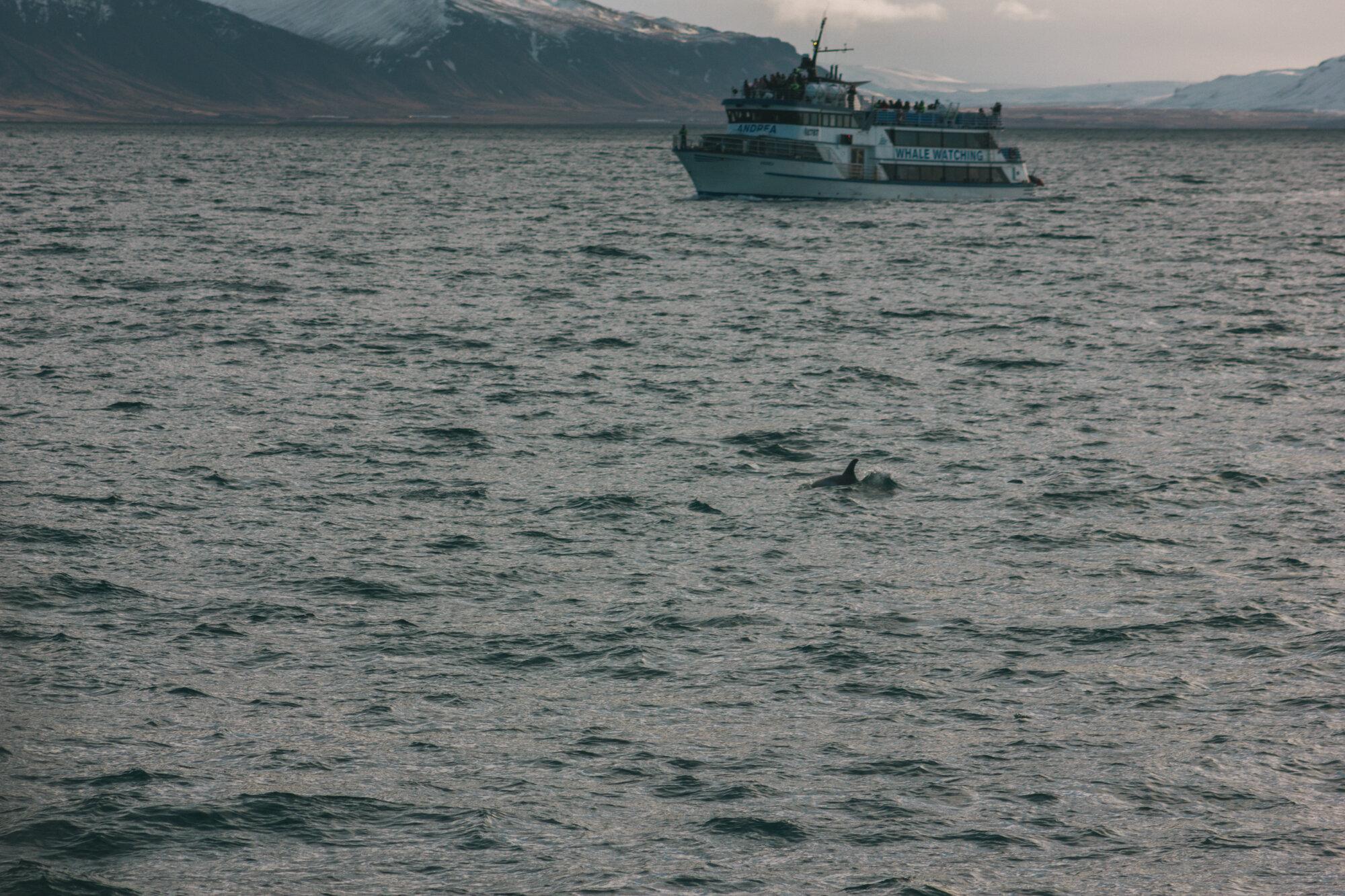 冰岛雷克雅未克的Elding Tours观鲸