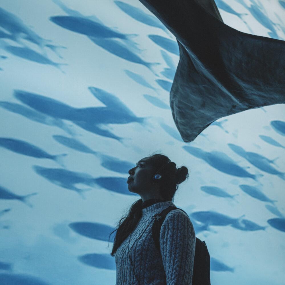 梅尔-鱼-鲸鱼海豚——博物馆——雷克雅未克- 1. jpg