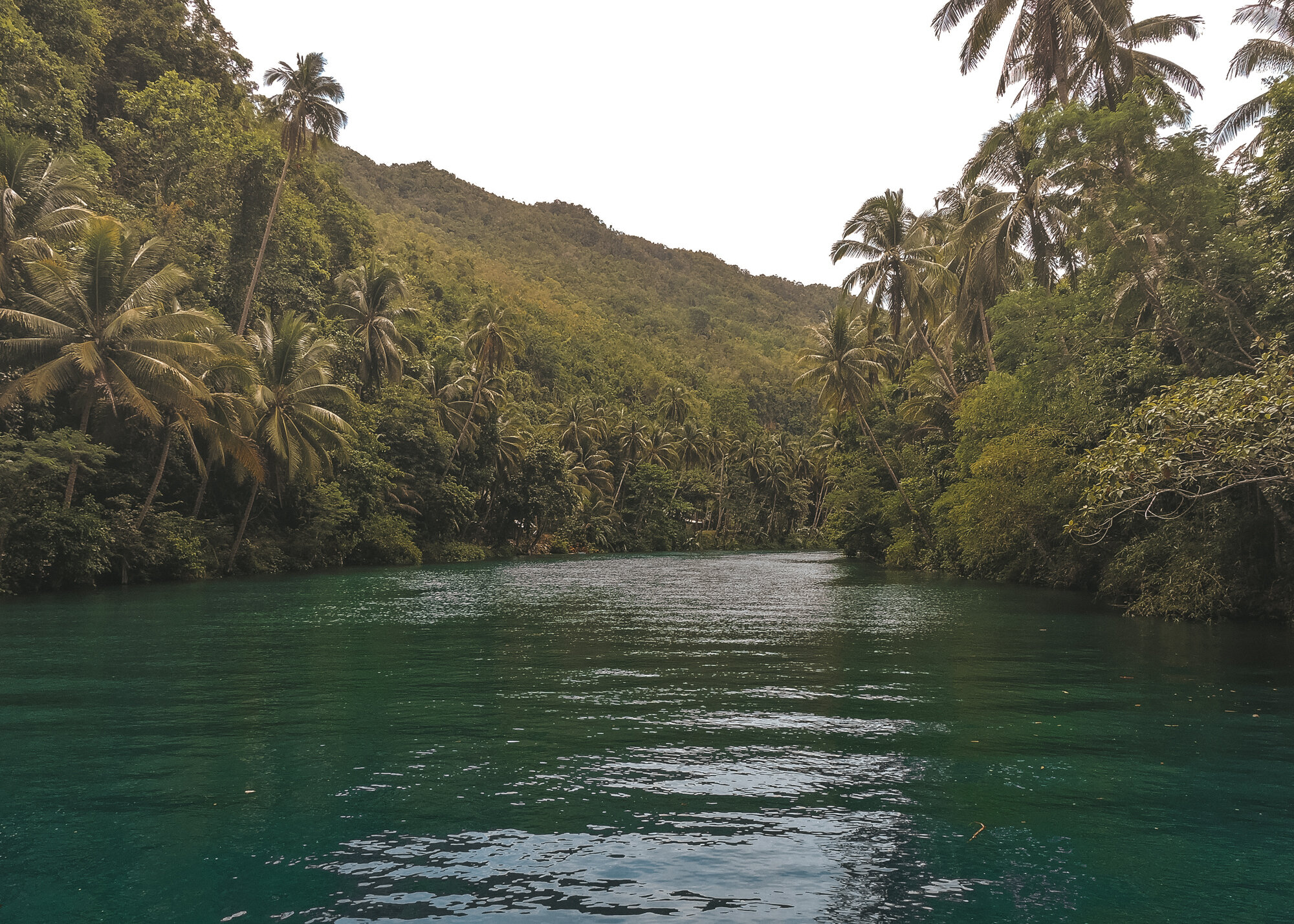在保和岛,沿着蓝绿色的洛博克河航行,椰子树丛林排列在河边- Karen Aileen拍摄