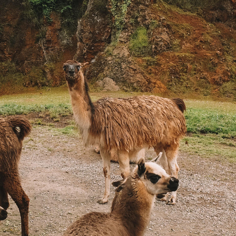 卡巴塞诺国家公园-在西班牙桑坦德要做的事-1.jpg