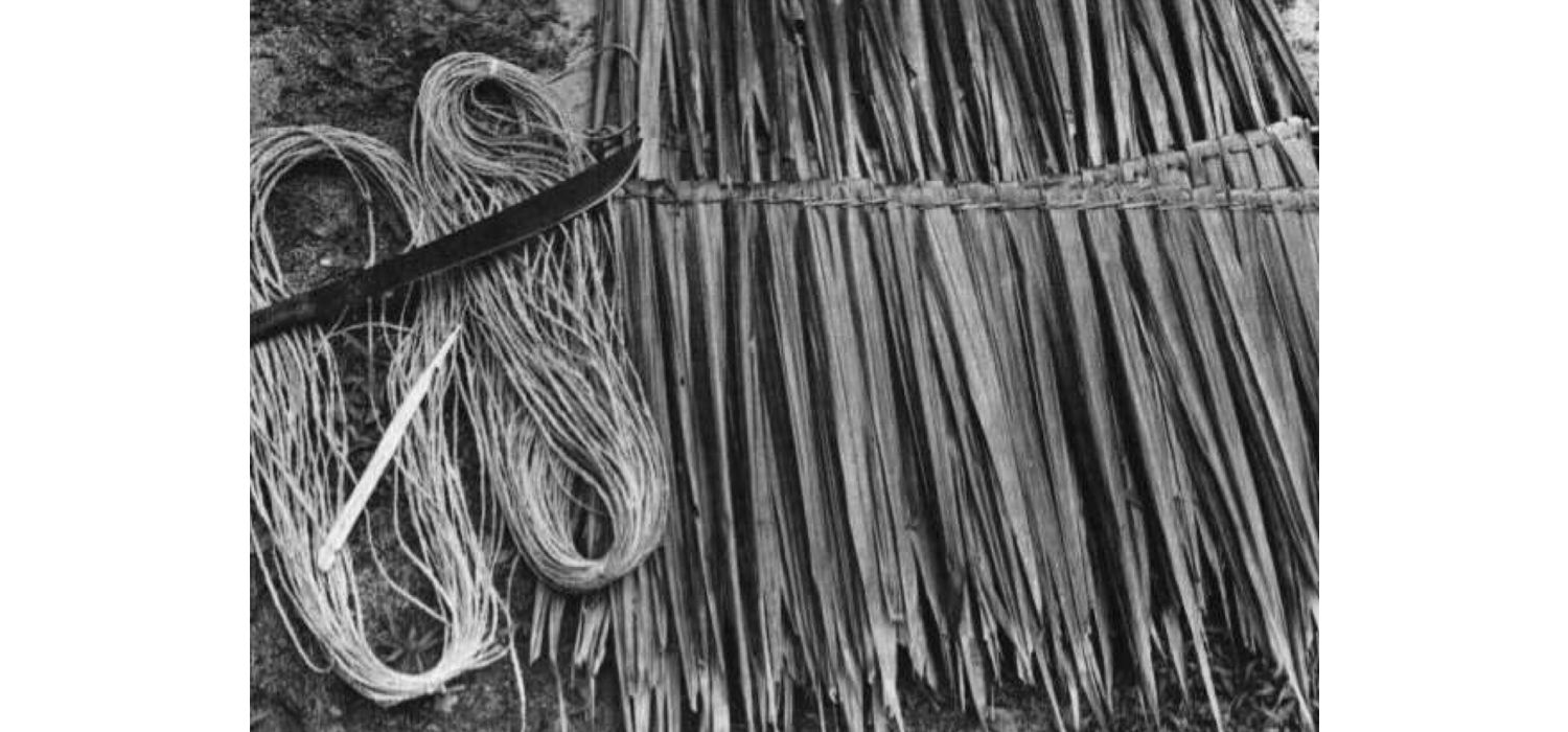 Figure 7   - prepared thatching,   lau  , made from sugarcane leaves. Source:   Higginson, F. L., ed.    The Samoan Fale   . Apia: UNESCO Office for the Pacific States, 1992: 19. Print. (edited)