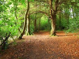 Hazelwood Walk