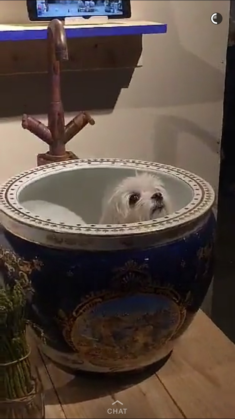 That one time someone left a maltese in the sink at Lil Mama's...   MORE COMING SOON