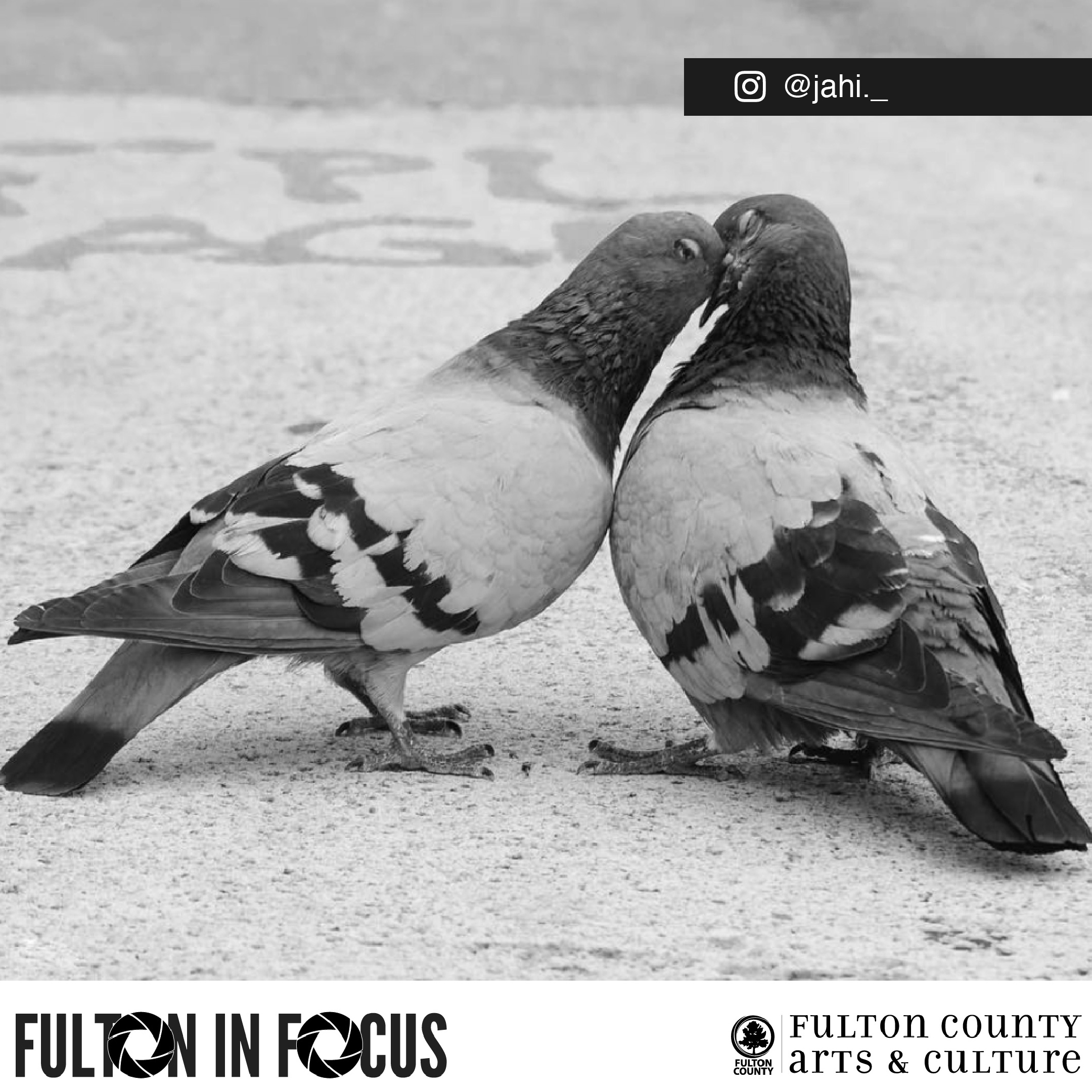 Fulton in focus-01.jpg