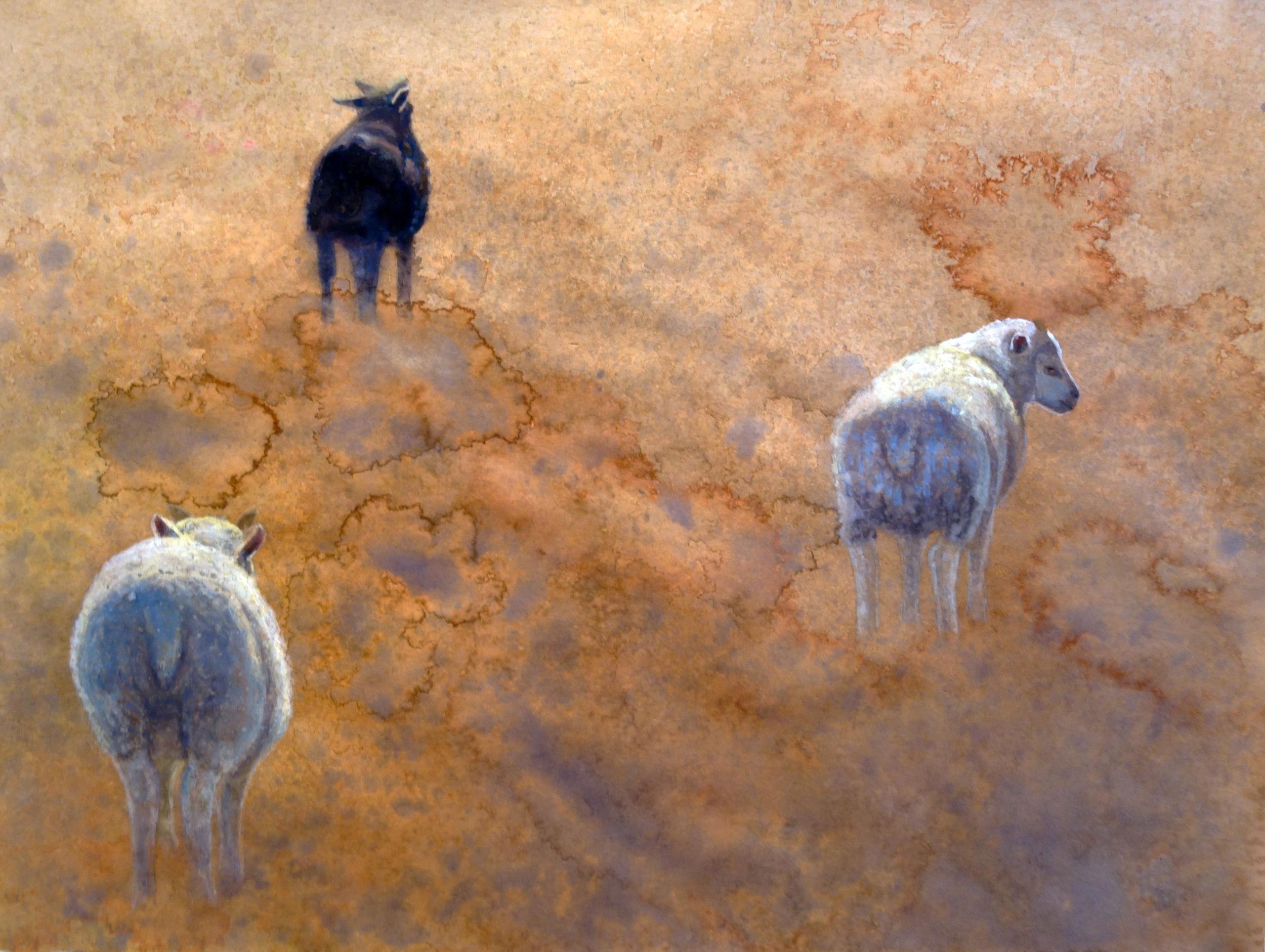 Lava Lambs