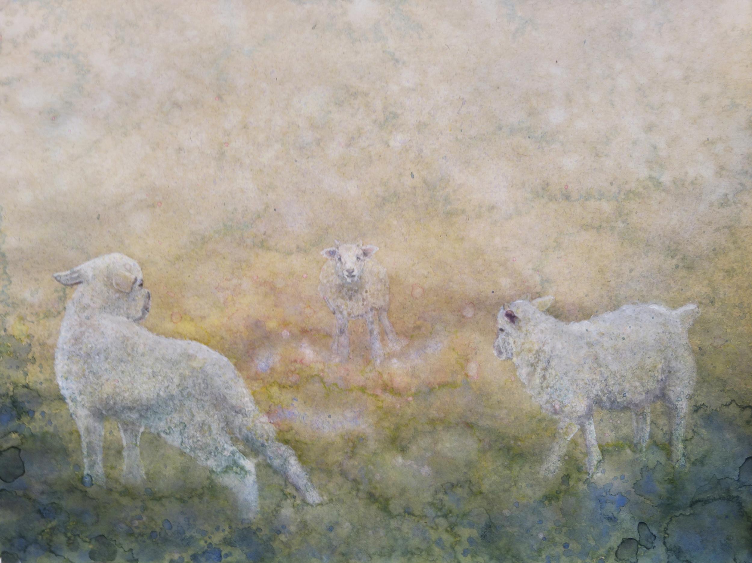 Ring of Lambs
