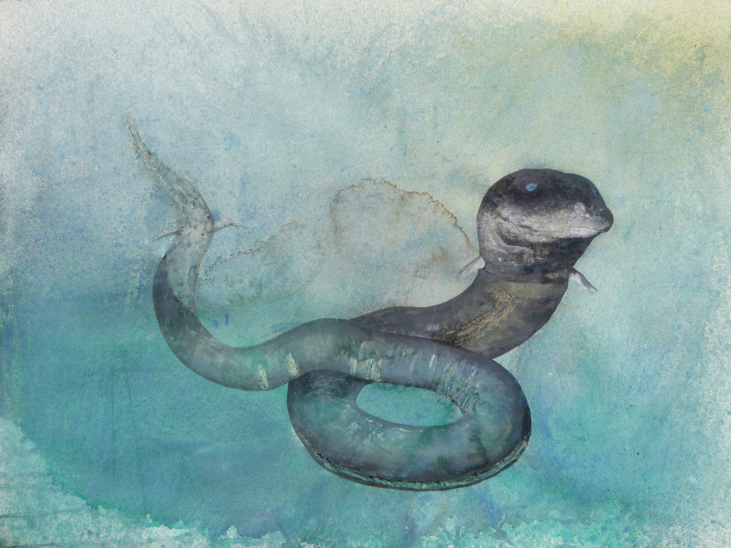 The previously commissioned portrait of John's amphiuma Chrissy.
