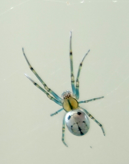 little spider 5-12-18 2.jpg