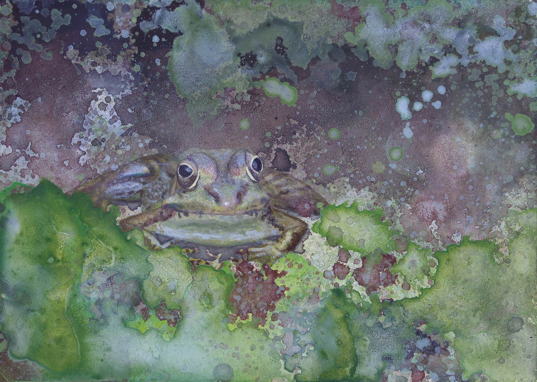 Shelby Prindaville painting frog marsh Rana ridibunda artwork acrylic artist.jpg