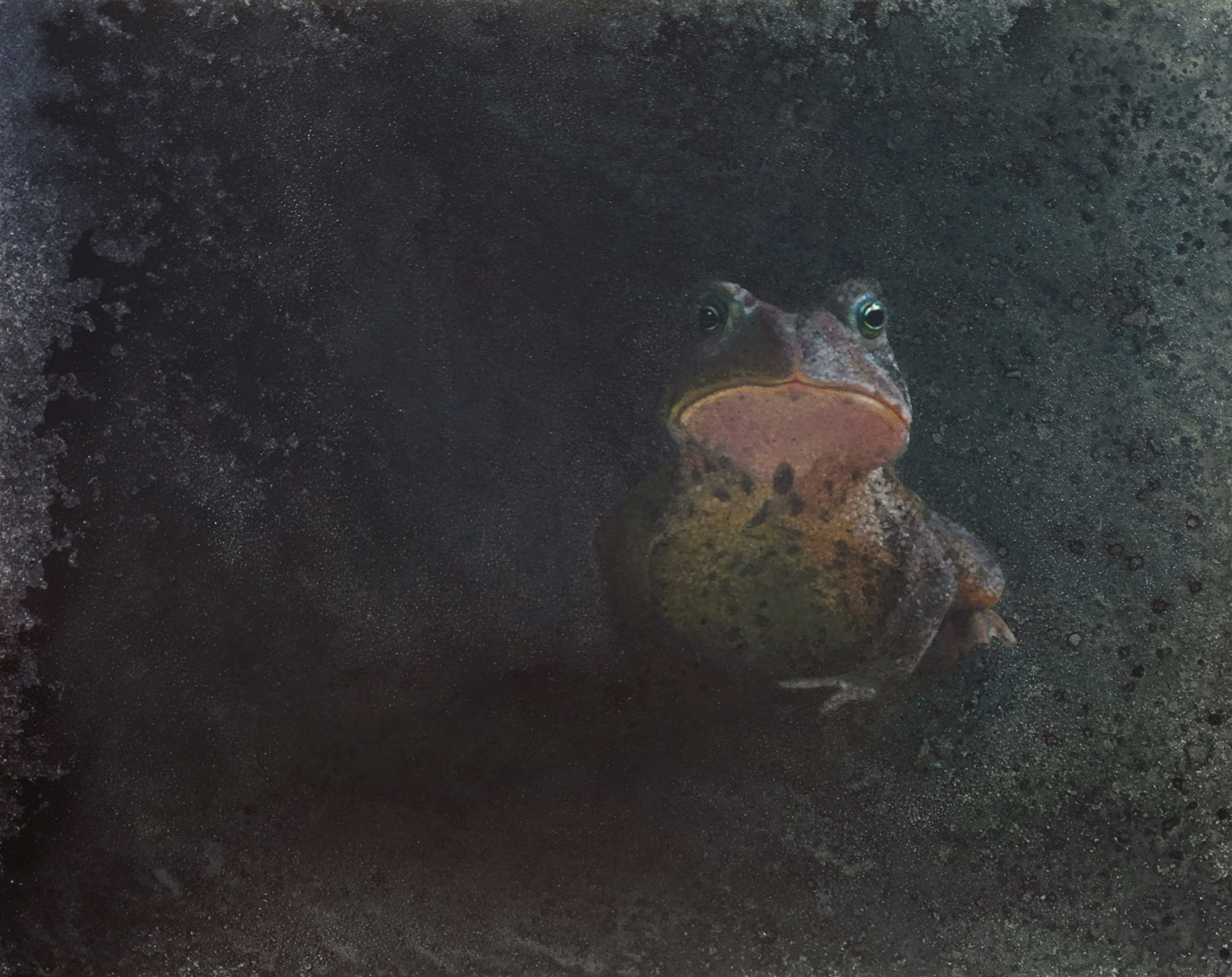 Guardian 1c.jpgShelby Prindaville toad painting guardian acrylic on panel