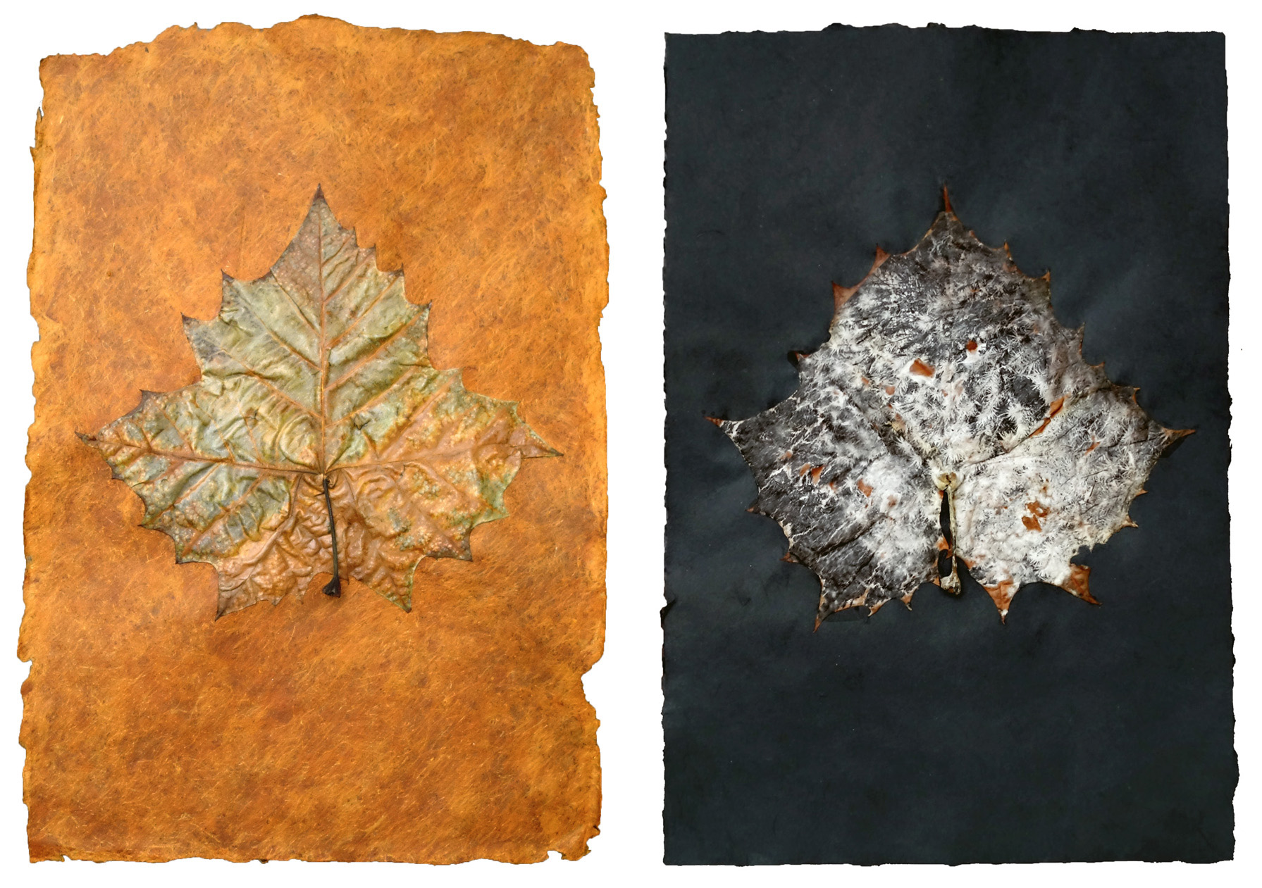 orange black leaf diptych.jpg