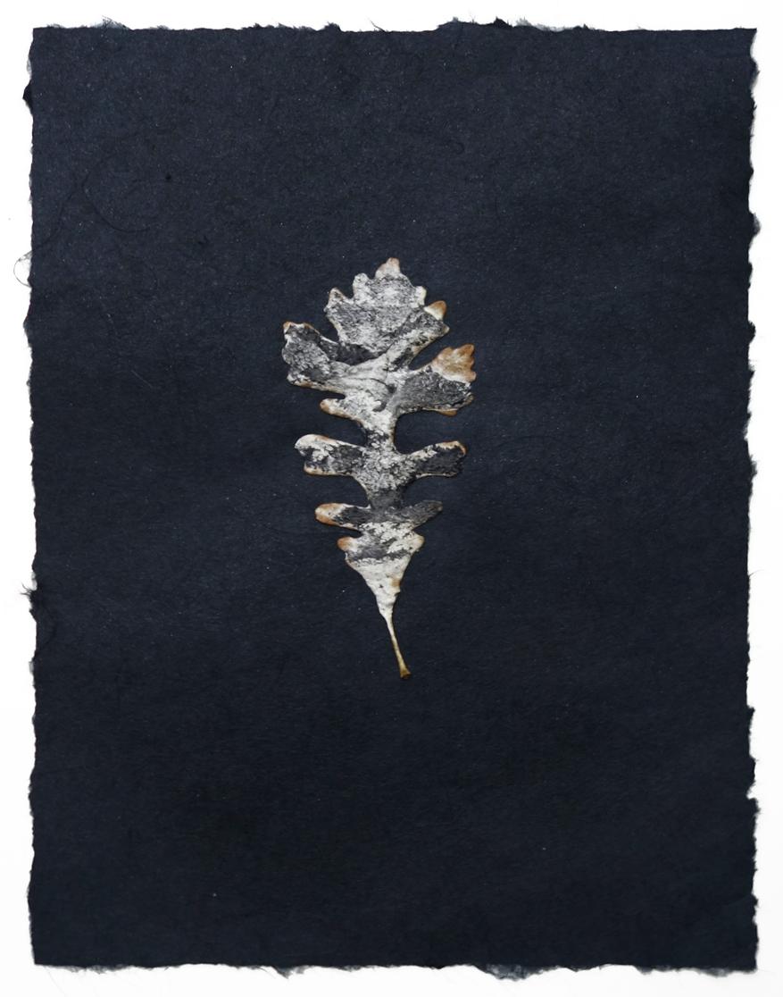 black paper small leaf 1c.jpg