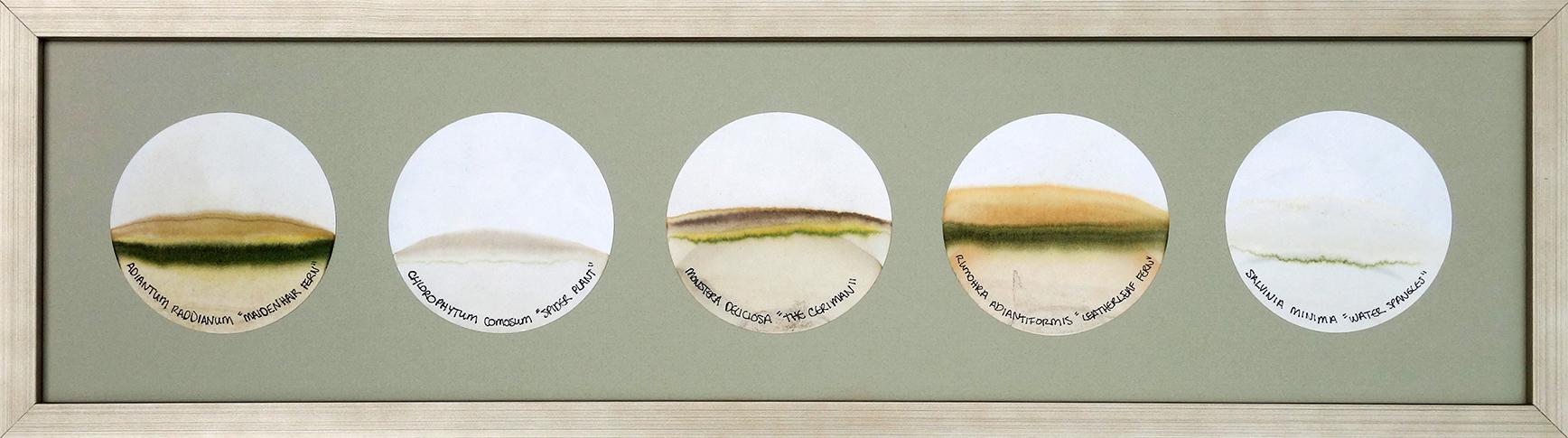 Transmigration Landscapes - Cadence c.jpg