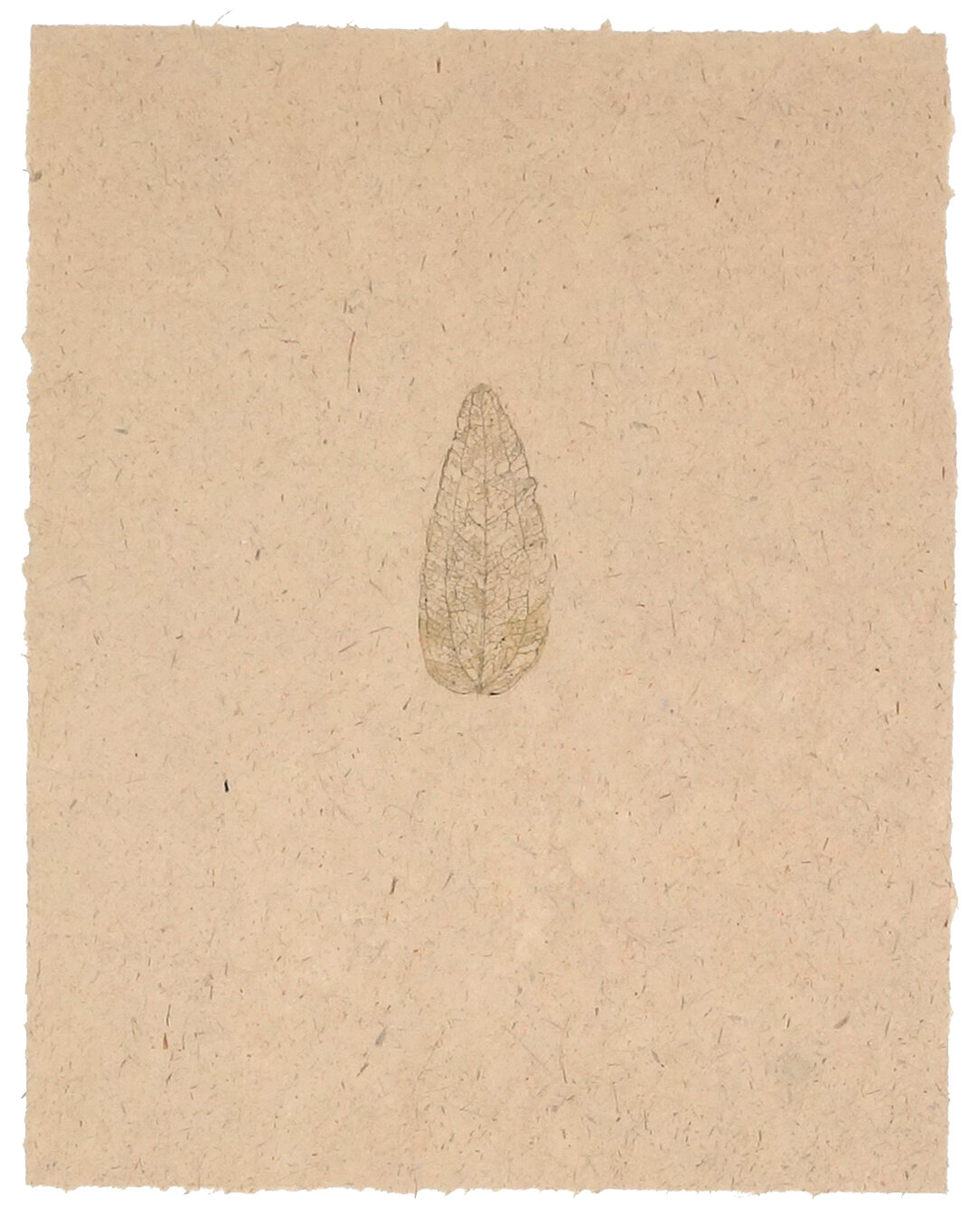 skeleton leaf 2.jpg