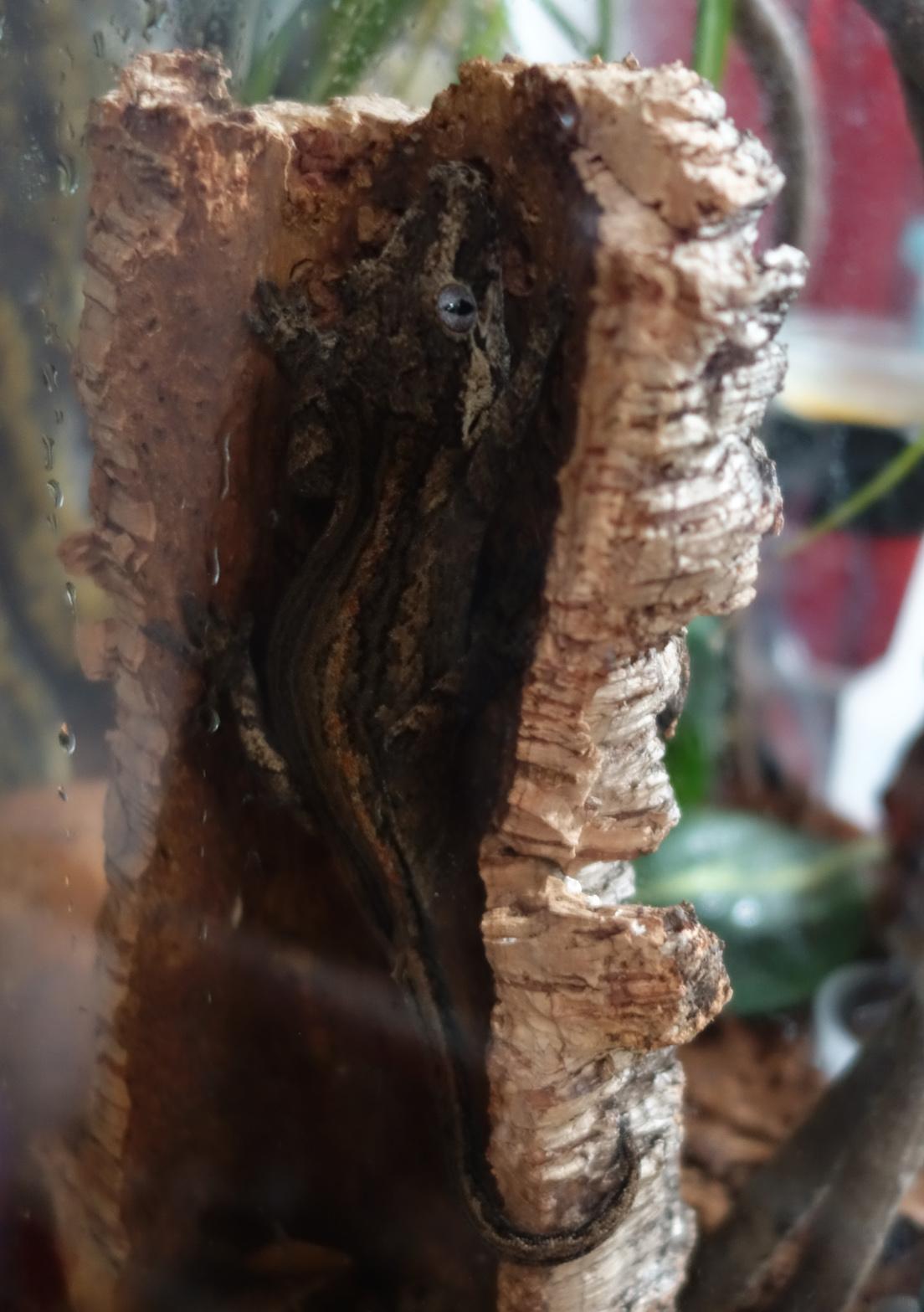 Ash Nov0519 cork2c.jpg