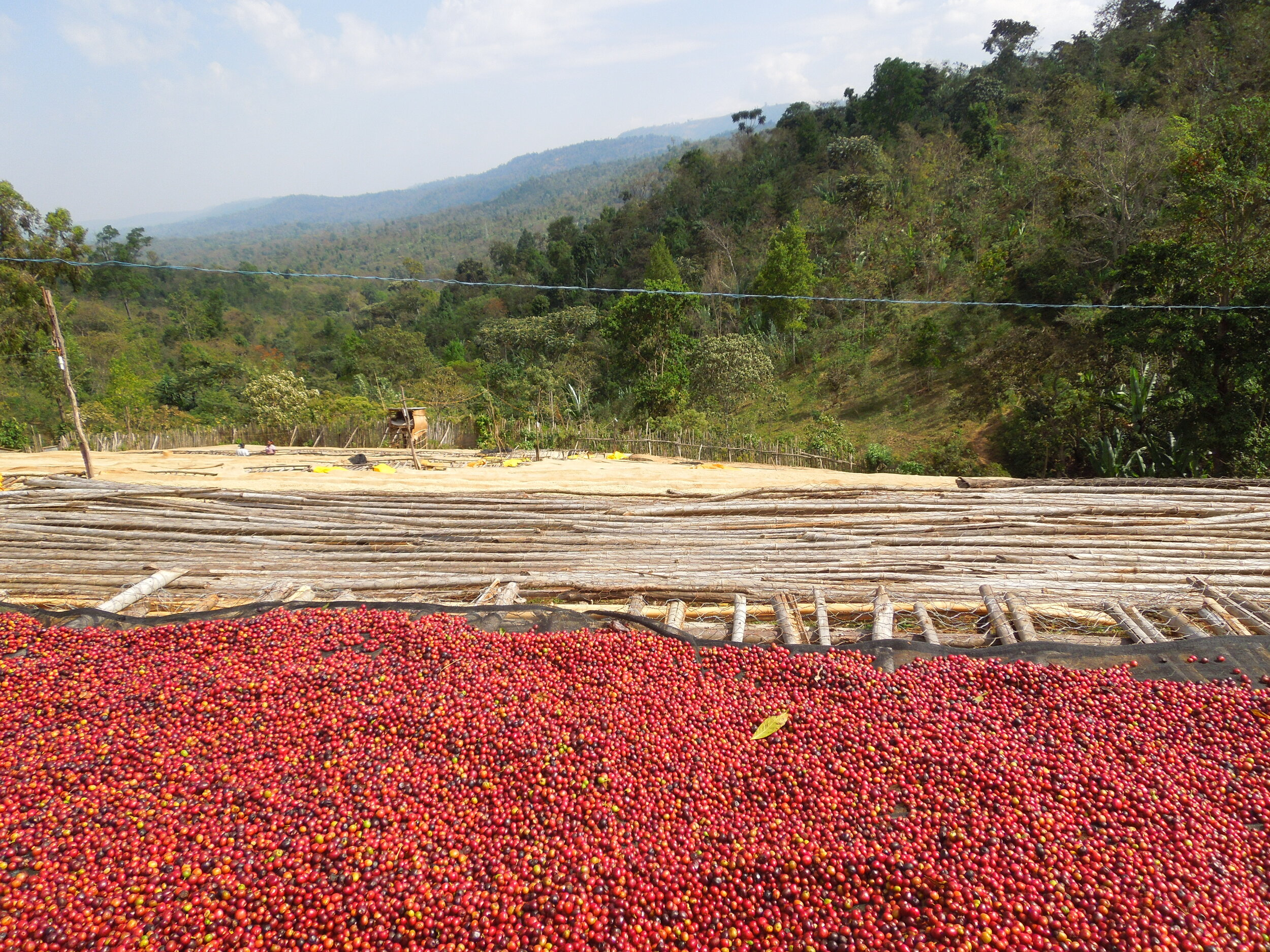 Ethiopia Yirgacheffe Dumerso Luckie Beans Coffee Roasters — Buy Coffee Luckie Beans Coffee Roasters