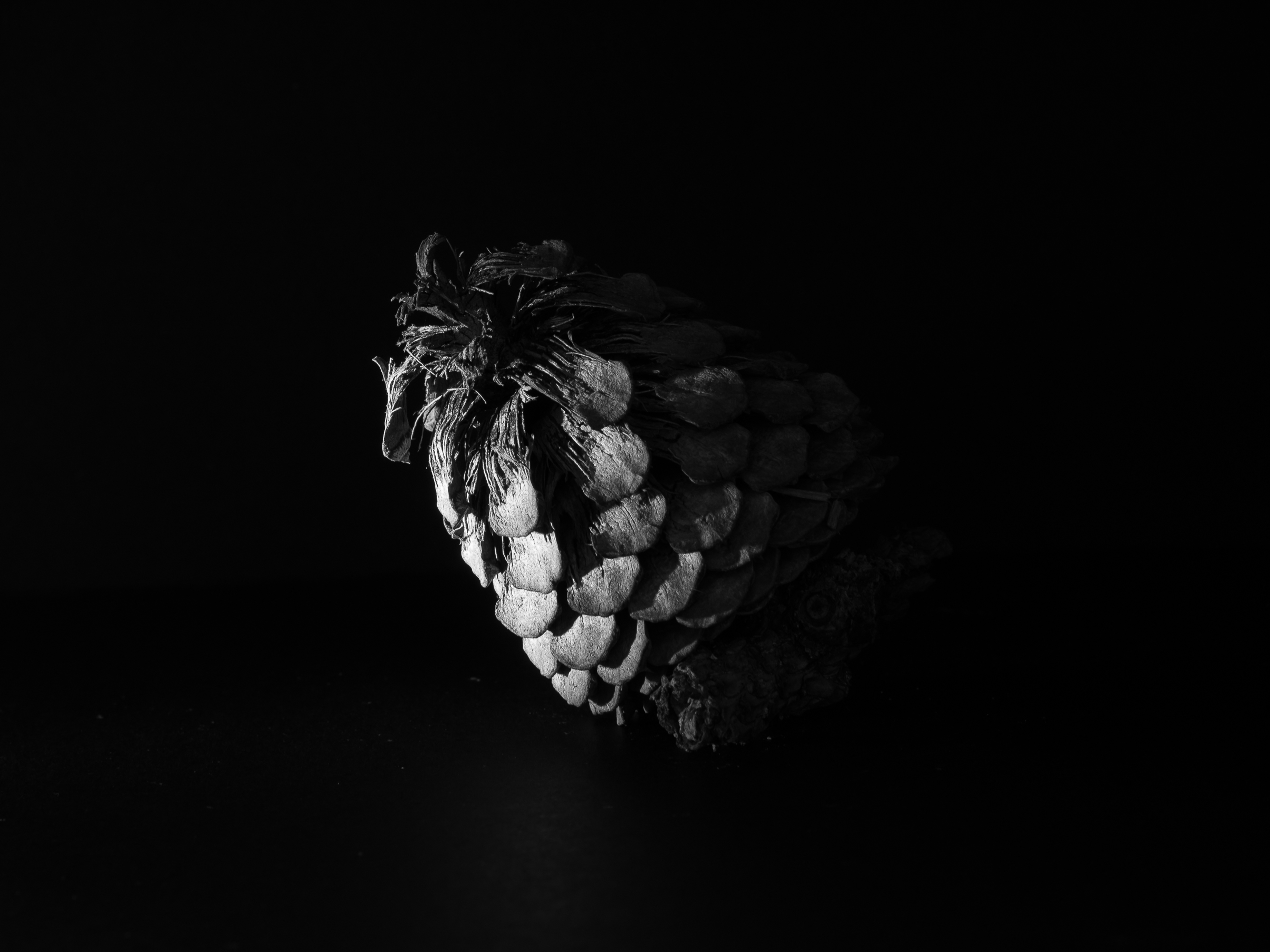 Pine Cone - Copyright 2016 Hannah C. Nesbeda