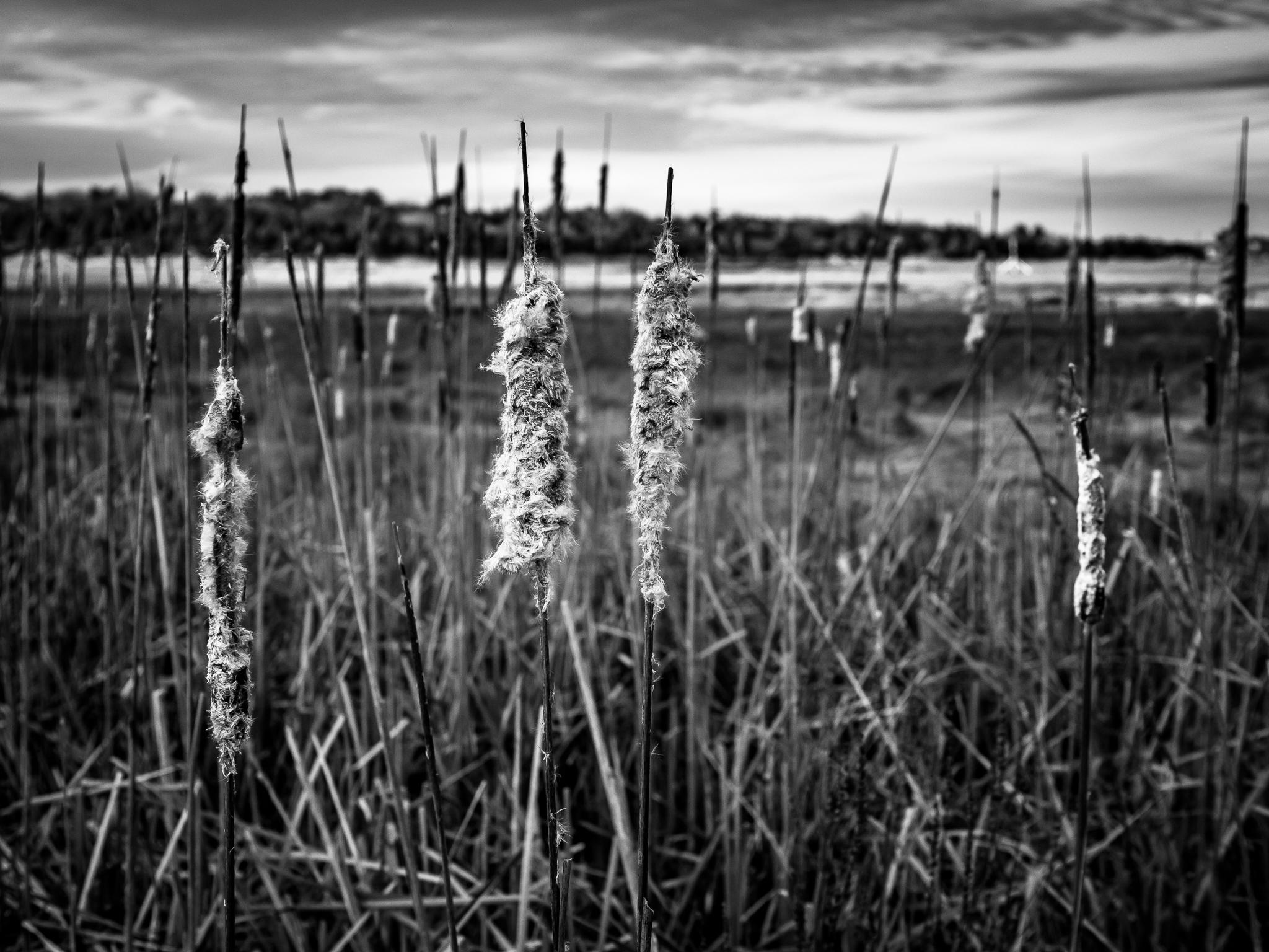 black and white marsh landscape 1_.jpg