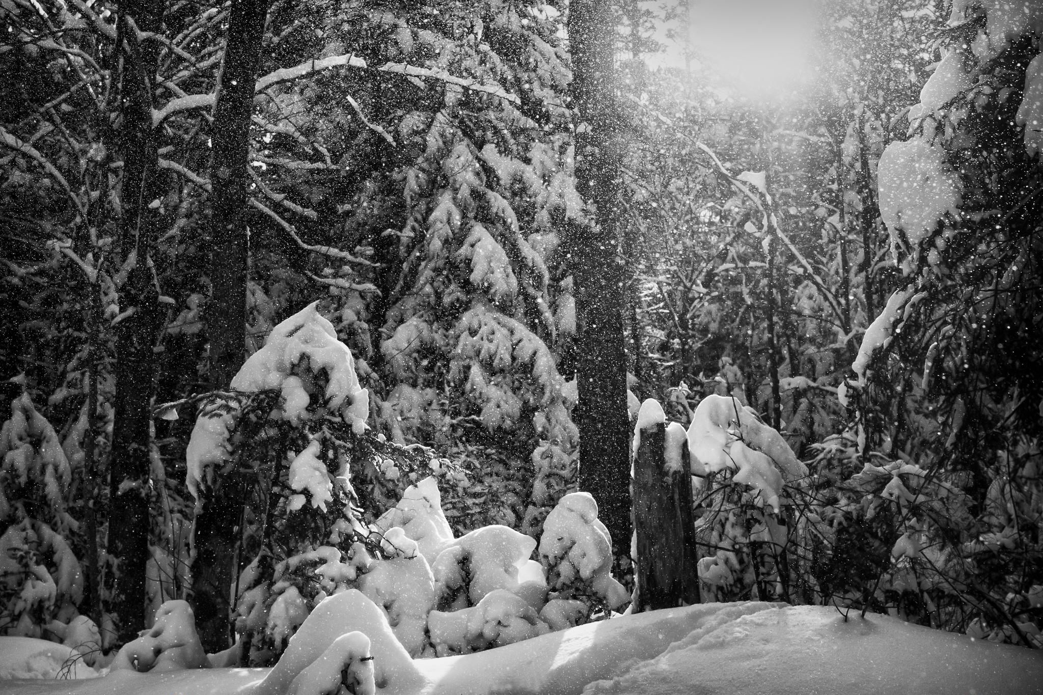 Snowfall at Tucker Brook