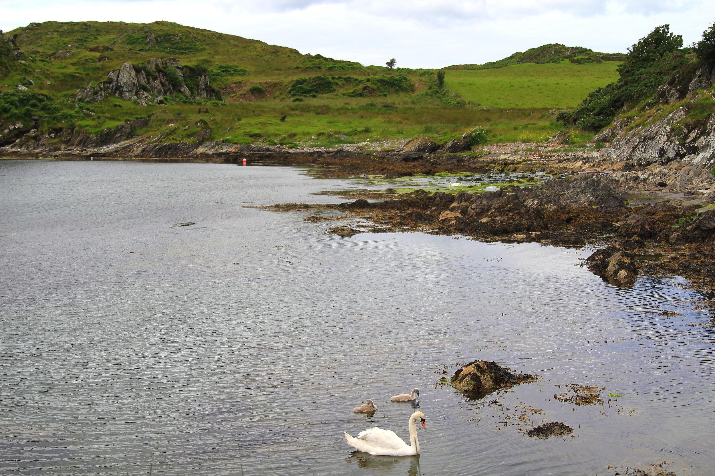 Scotland wildlife