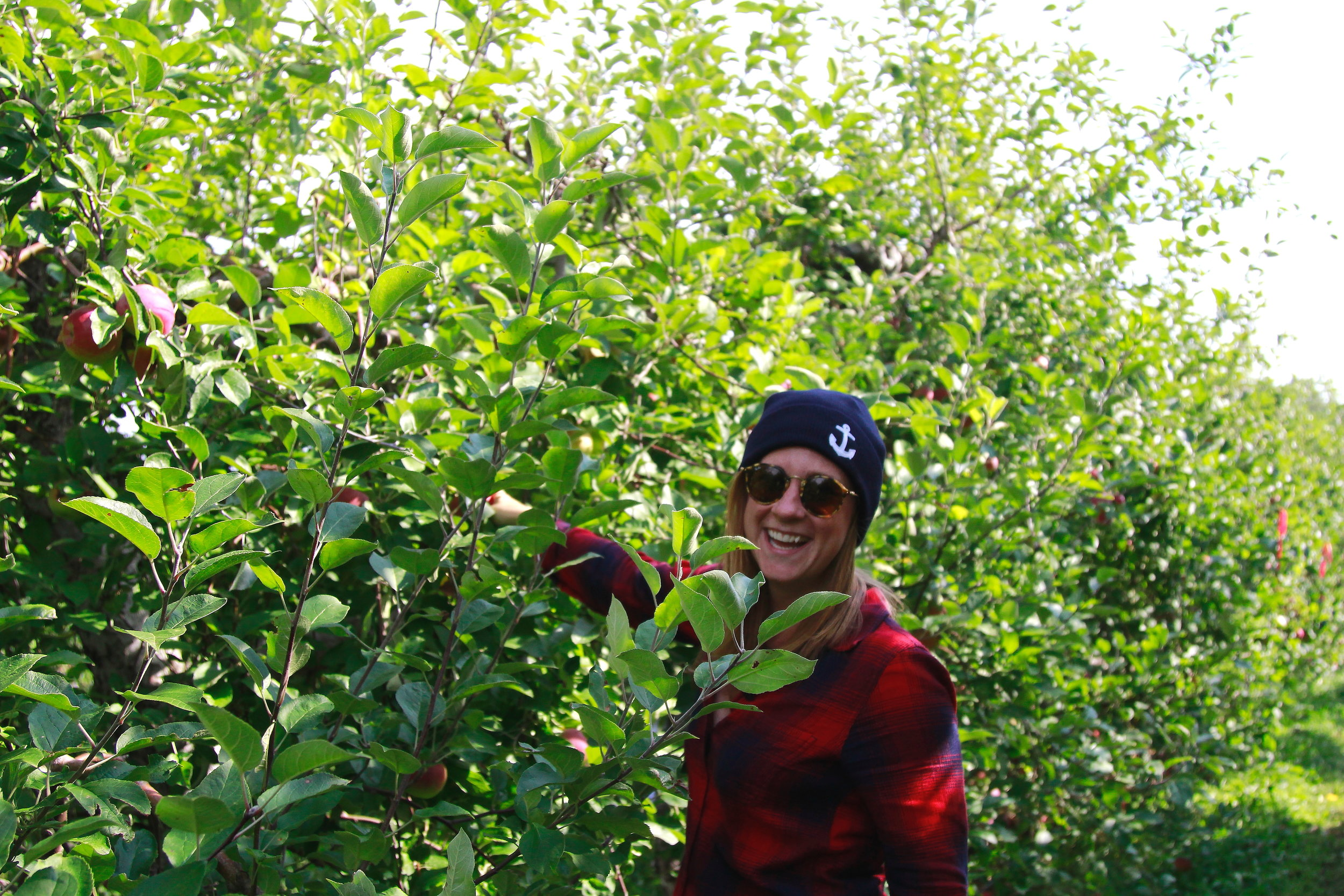 Apple picking at Applecrest Orchard!