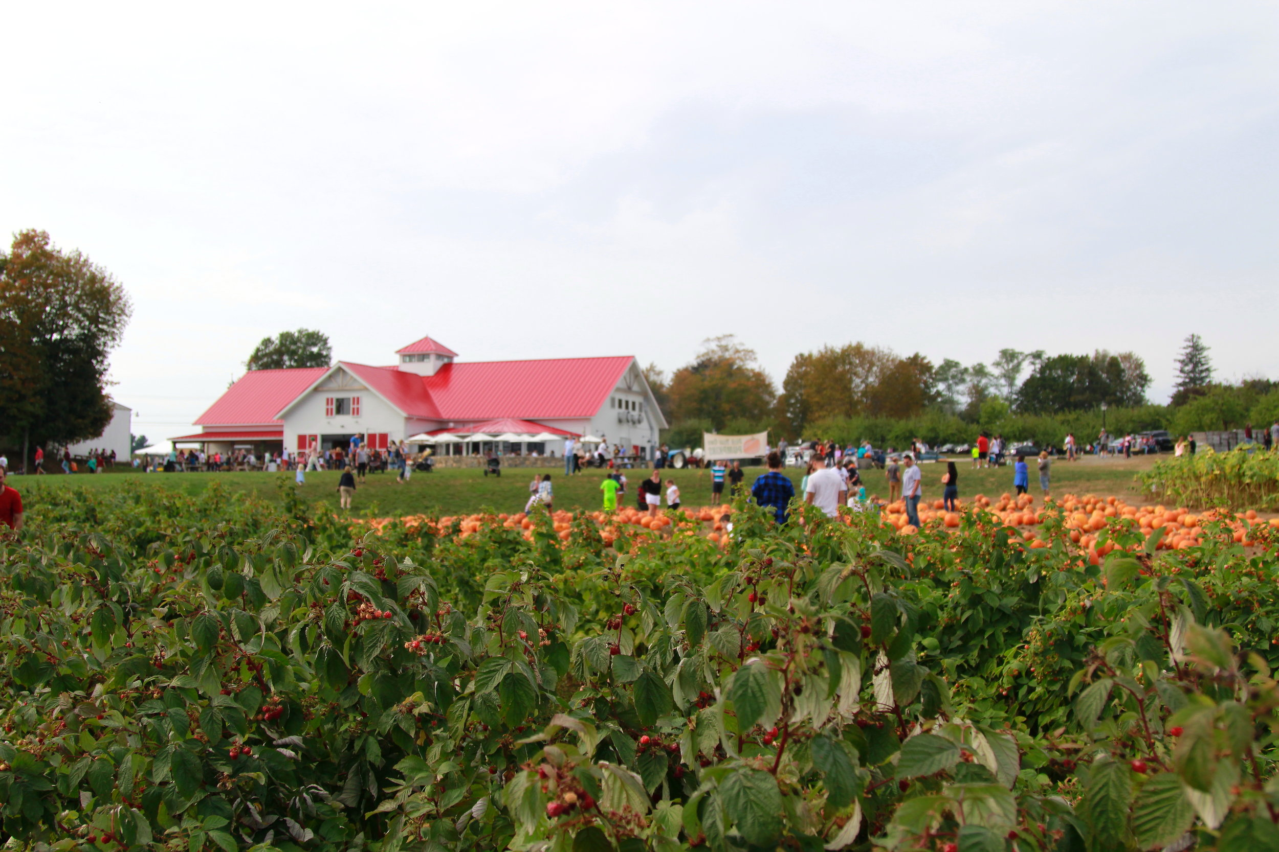 Applecrest Orchard Farm in New Hampshire - pick your own apples, seasonal berries, pumpkins...so fun!