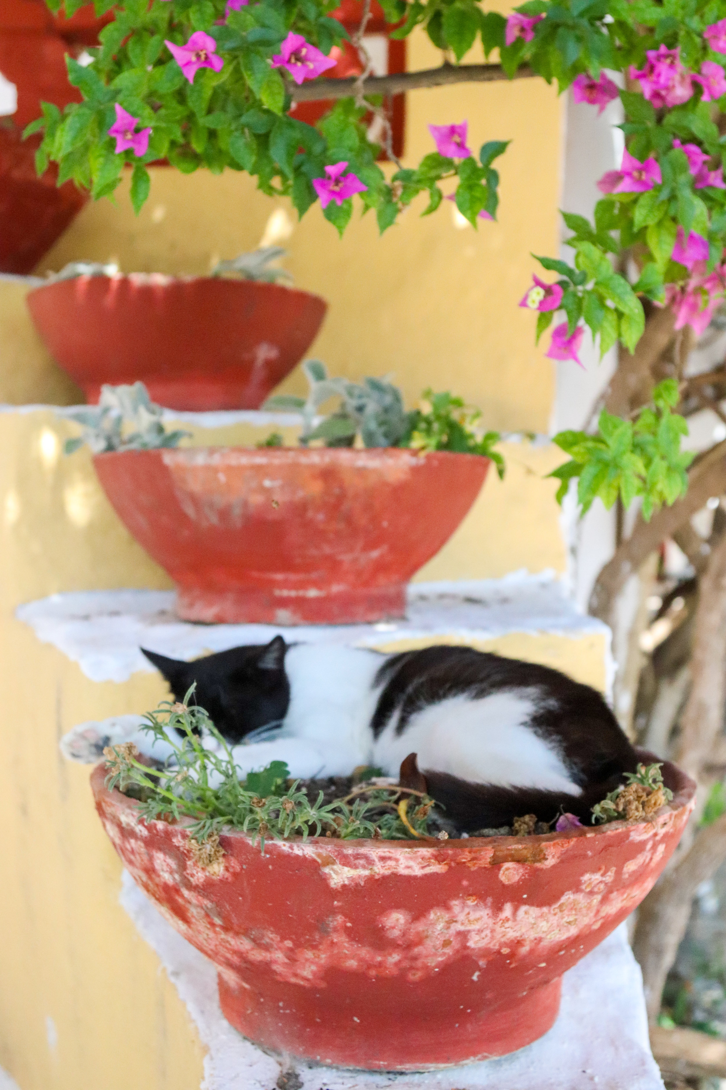 stray cat napping in Corfu, Greece