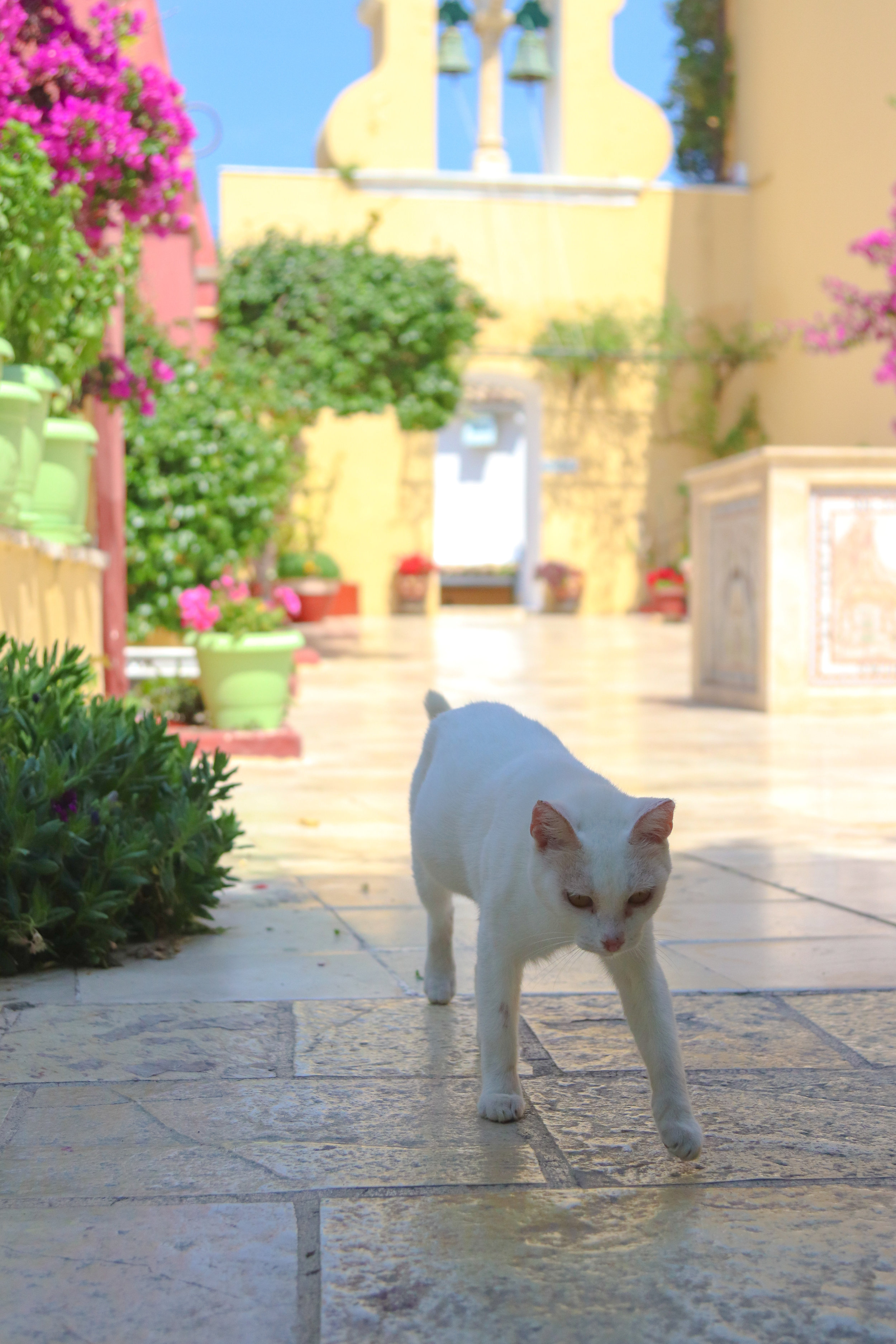 stray cats in Greece