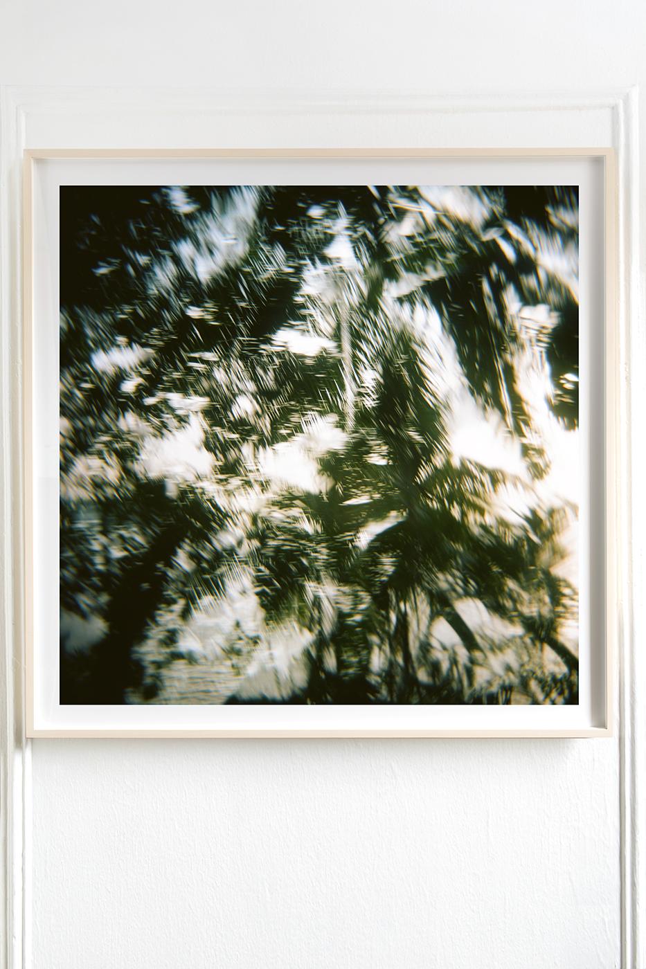 Palm Tree Indian Ocean