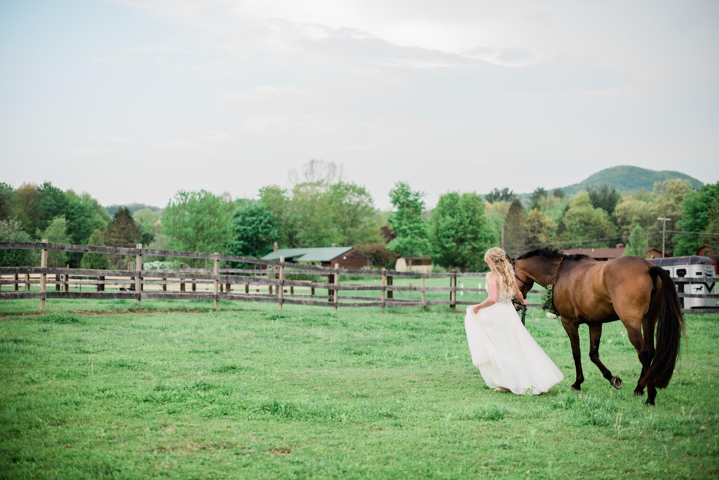 Hadley MA Equestrian Portraits